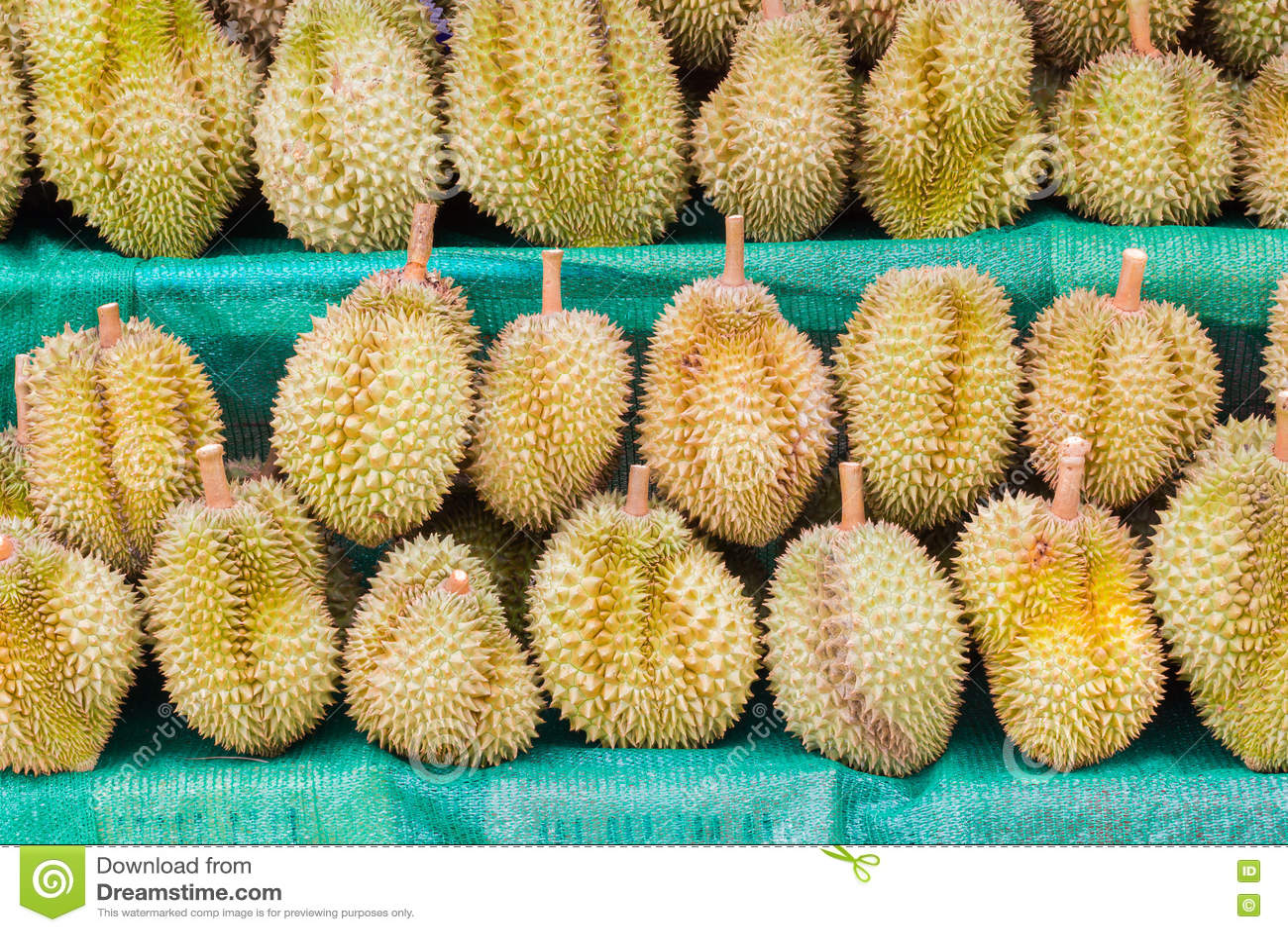 Download Дуриан, король плодоовощ, для продавать в Таиланде Стоковое Фото - изображение насчитывающей пепельнообразные, плодоовощ: 72292796
