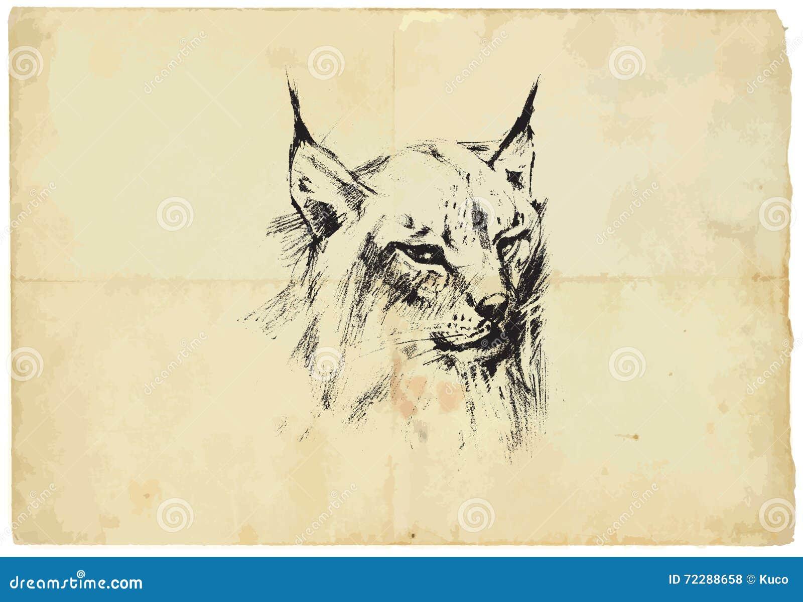 Download Евроазиатский рысь - чертеж карандаша, который нужно Vector Иллюстрация вектора - иллюстрации насчитывающей линия, scrapbook: 72288658