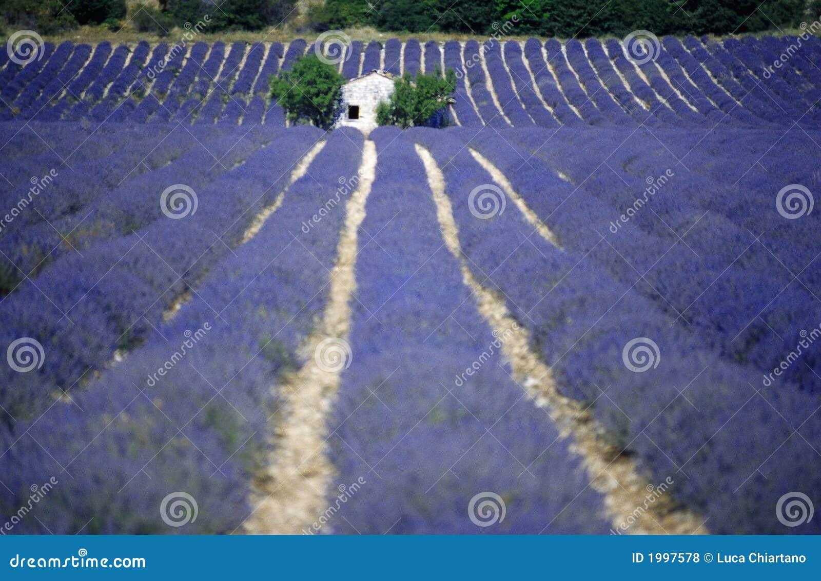 европа fields лаванда Провансаль Франции
