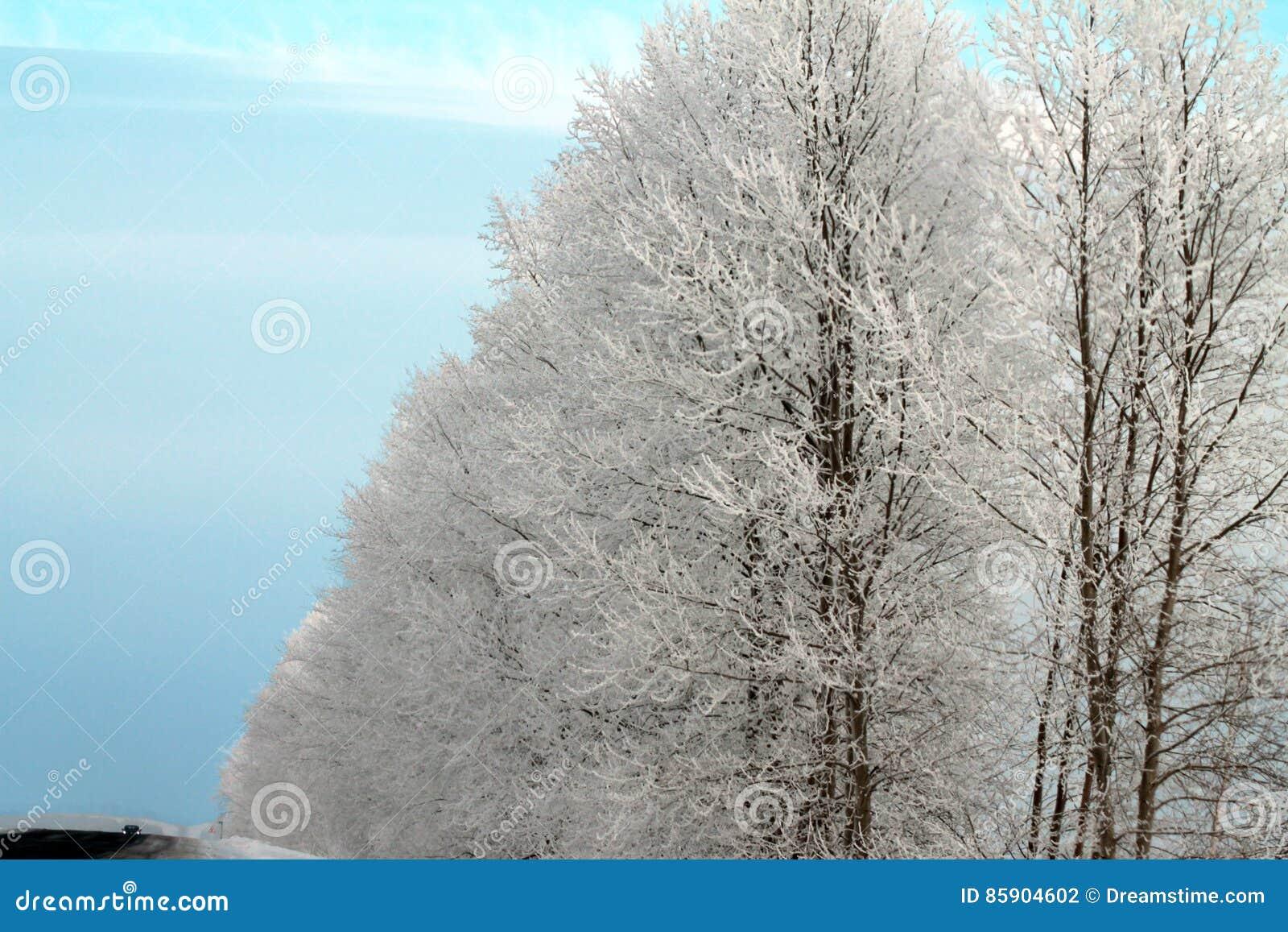 легко редактируйте изображение к зиме вектора валов