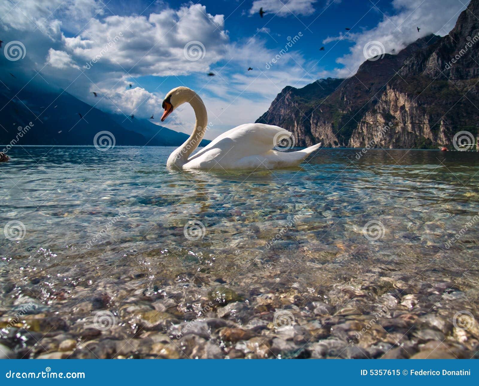 его лебедь озера