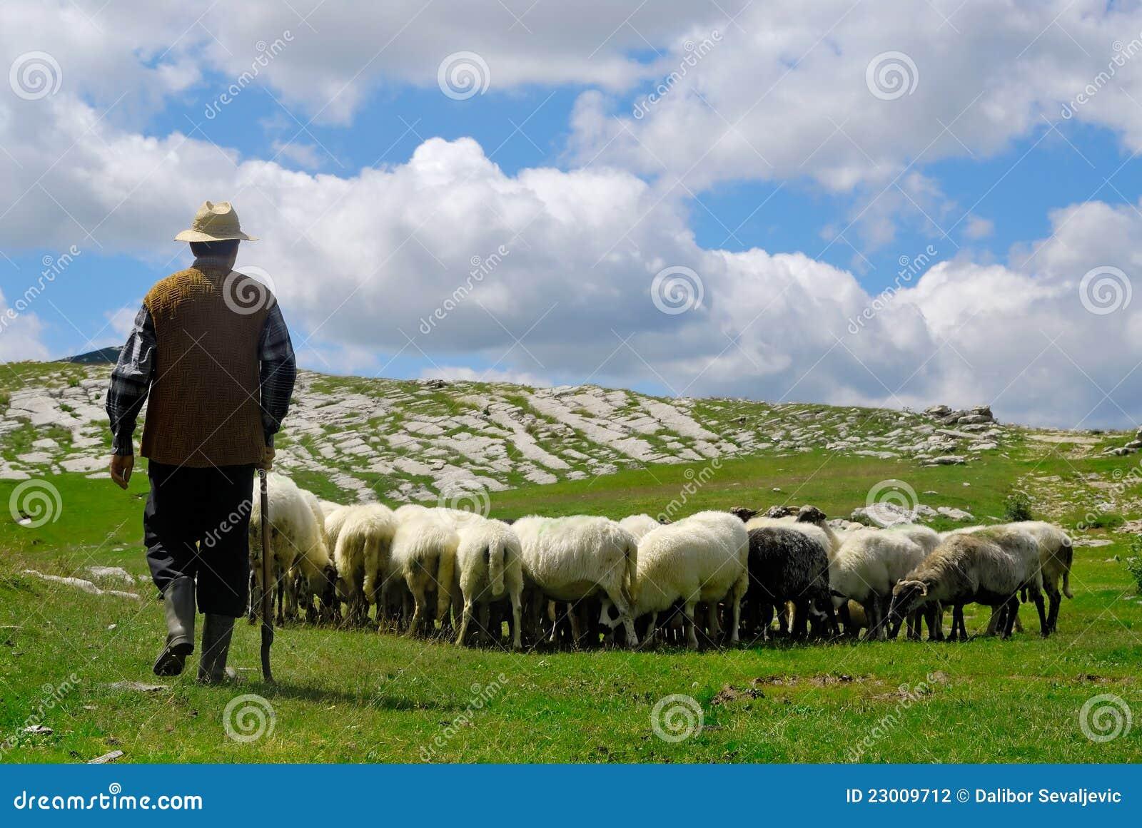 его чабан овец