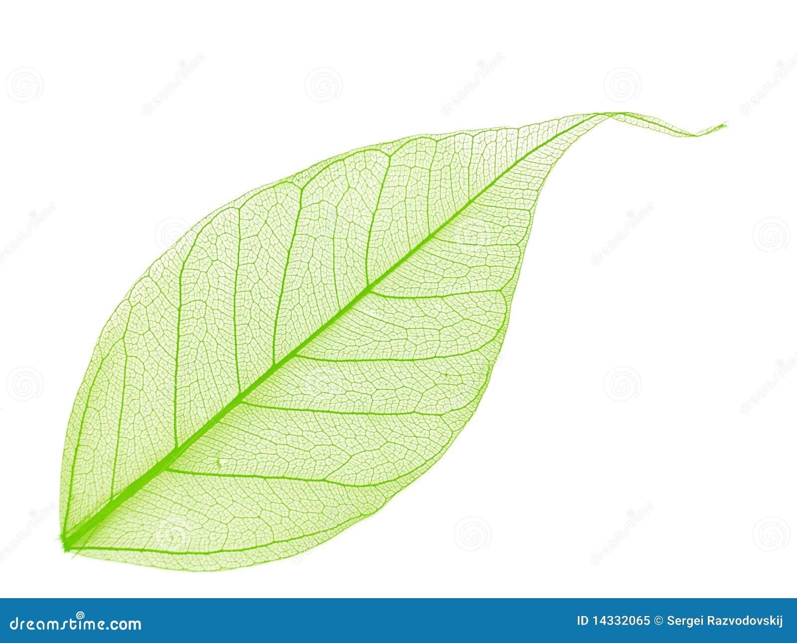 Скелет из листьев