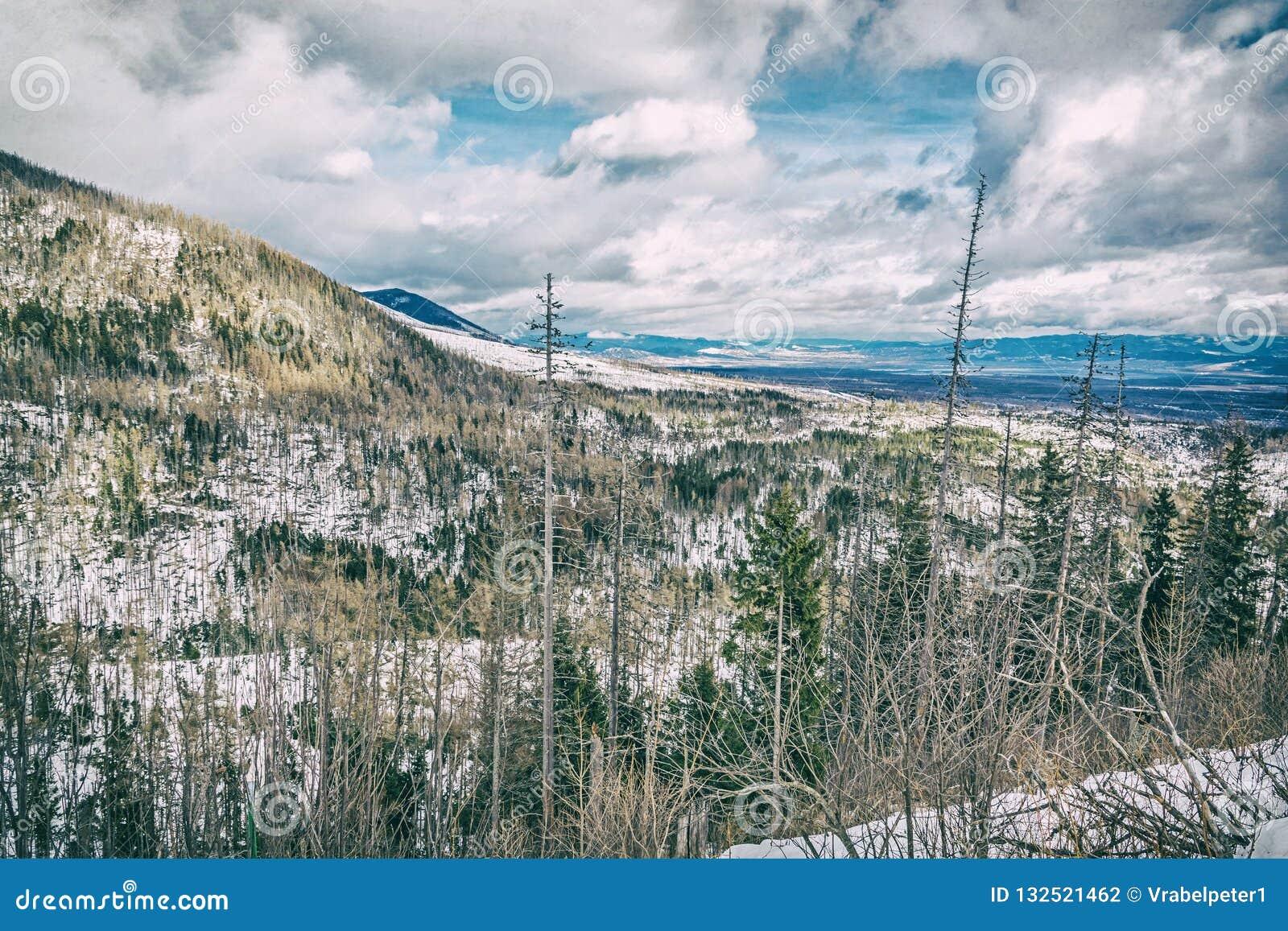 Елевый лес после стихийного бедствия в высоком Tatras, сетноой-аналогов фильтр