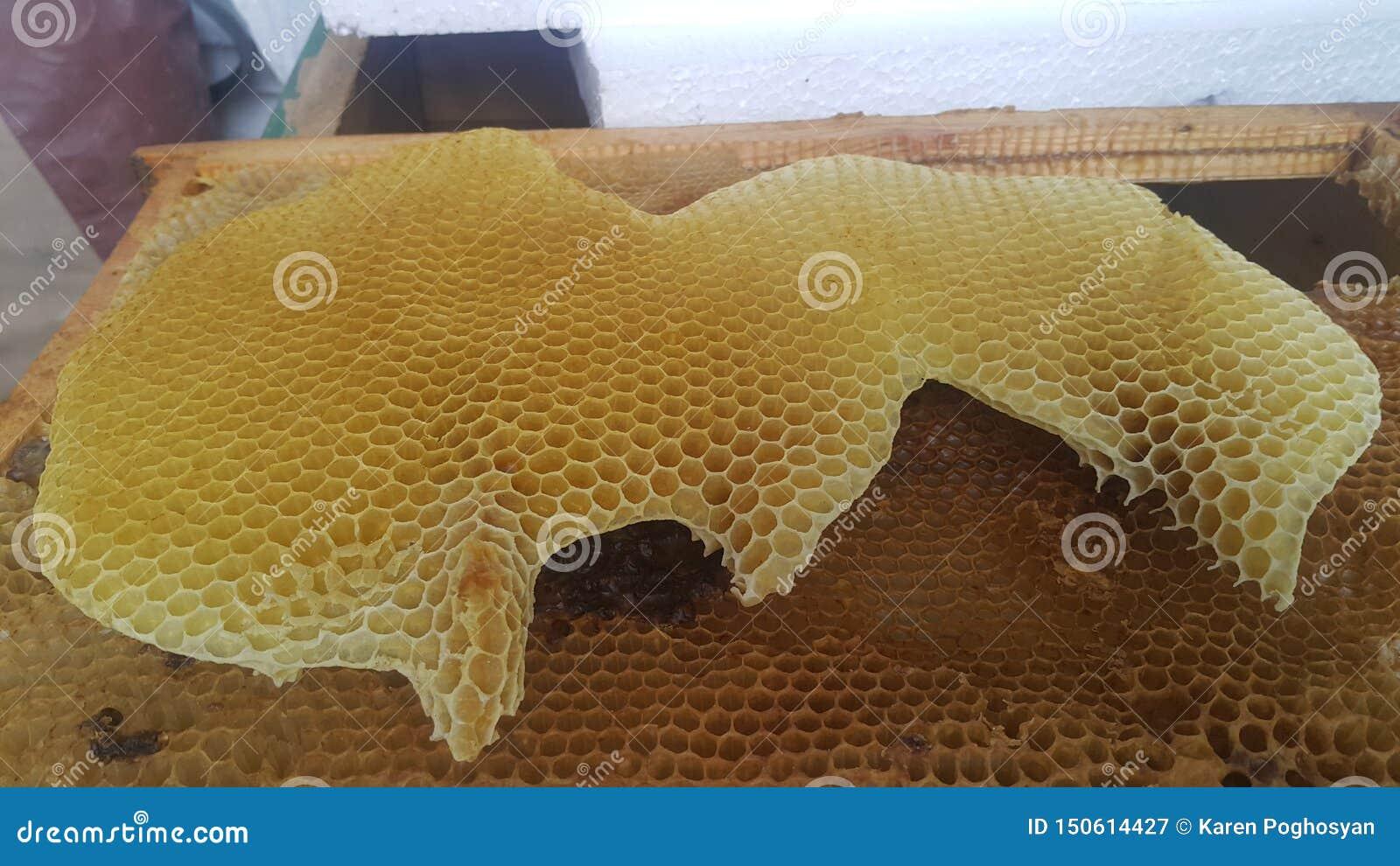 Естественная золотая пчела сота, который выросли пчелы
