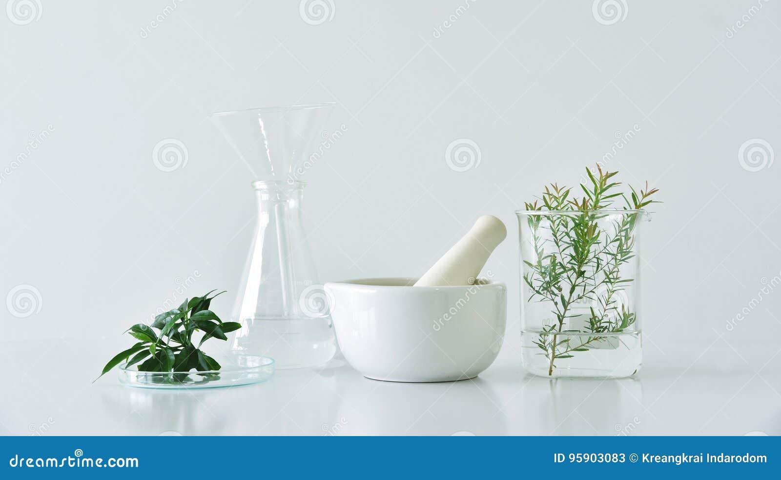 Естественная органическая ботаника и научное стеклоизделие, альтернативная медицина травы, естественные продукты красоты заботы к