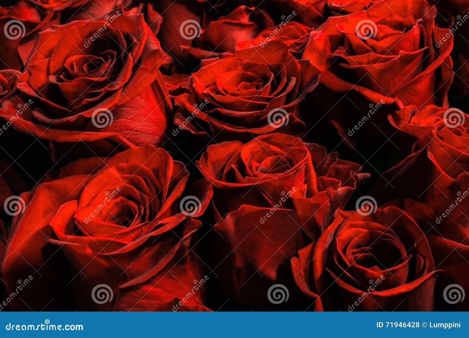 Естественная предпосылка красных роз