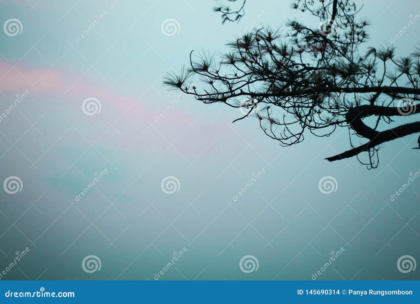 Естественные ветви в туманном небе и хорошем телезрителе