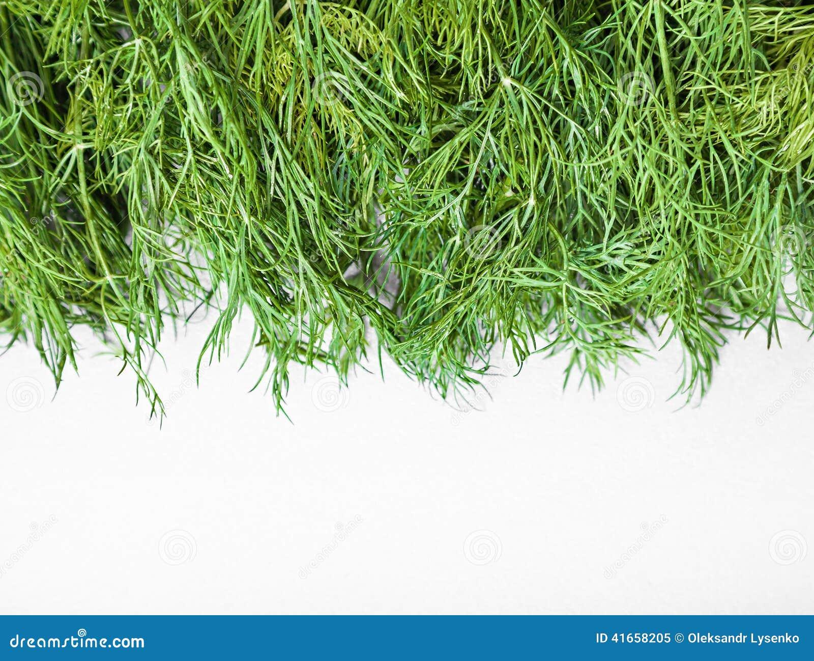 Естественный свежий зеленый укроп