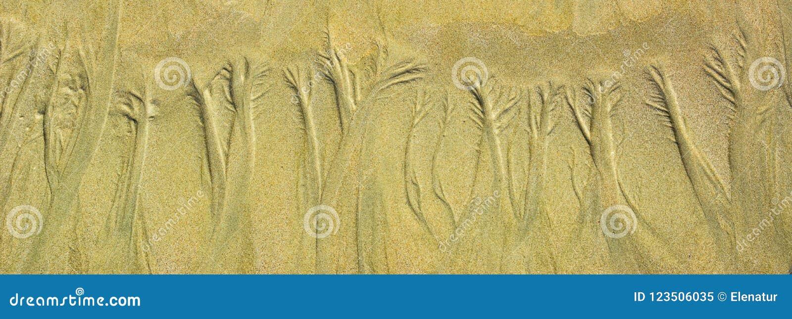 Естественный цветочный узор песка на плоском песчаном пляже во время малой воды