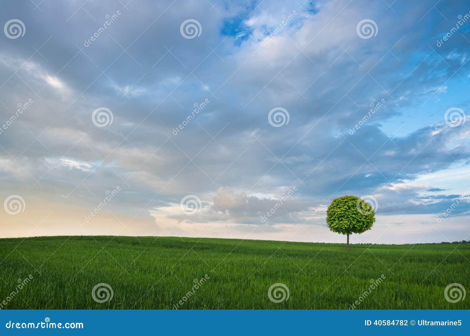 лето поля зеленое