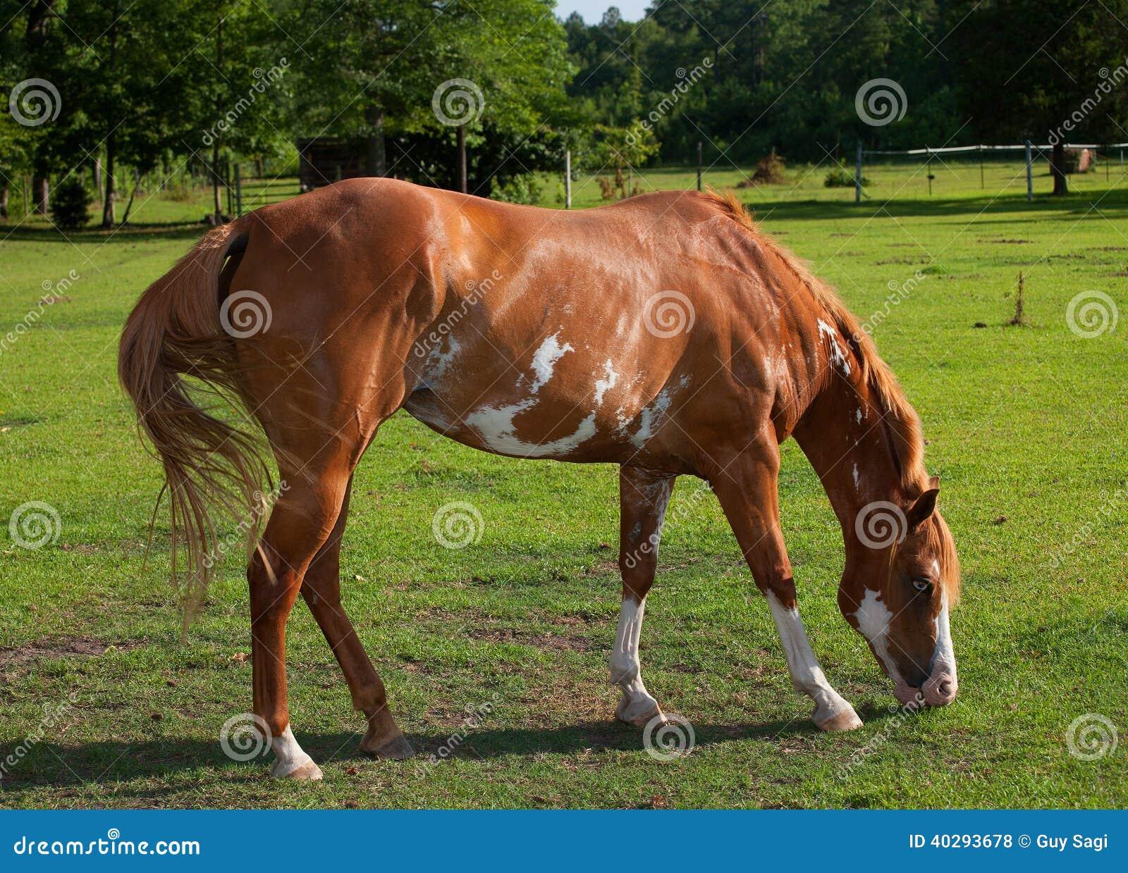 Еда лошади