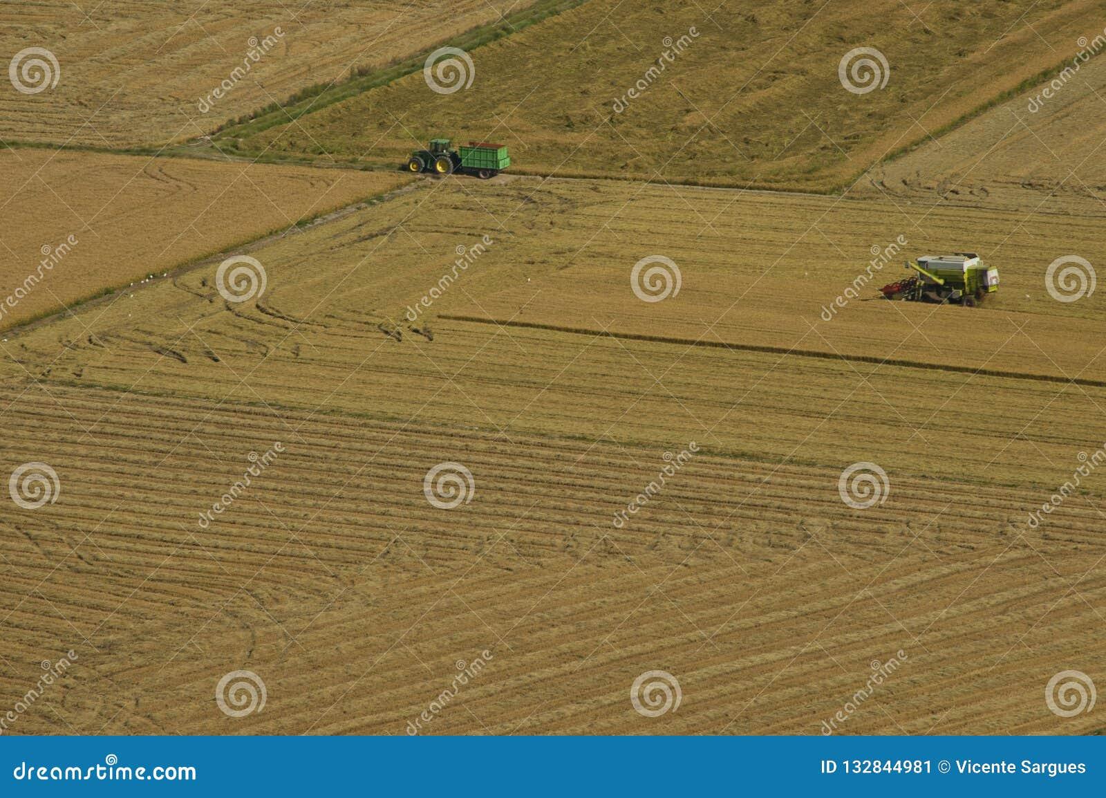Жатка и трактор жать поля риса