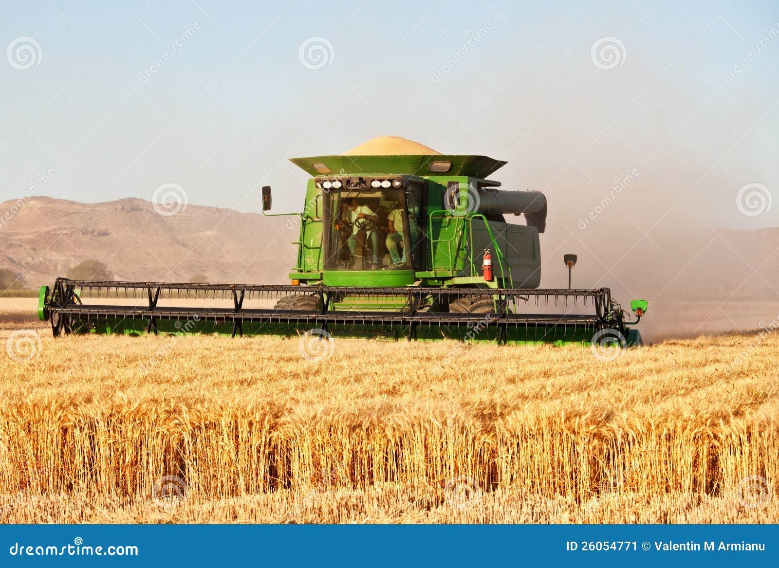 Жать зернокомбайн