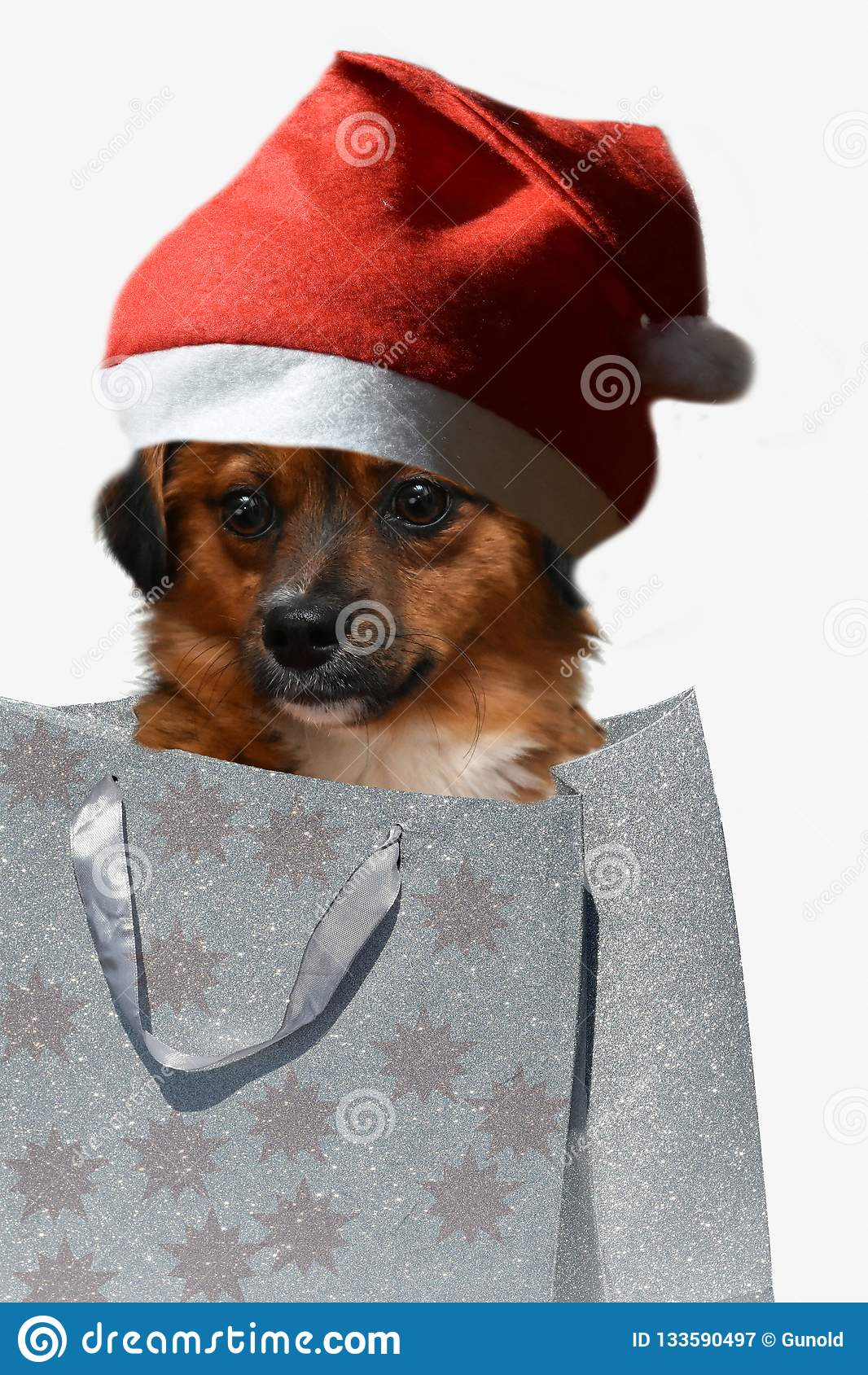 Ждать рождество, moggy собака со шляпой santa