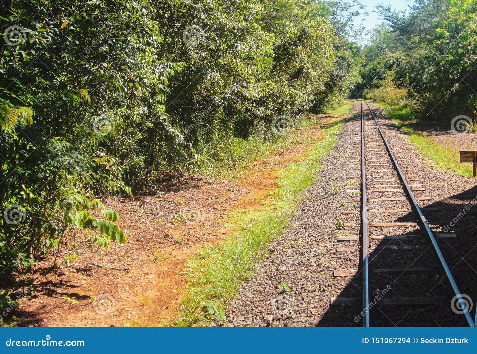 Железная дорога к Игуазу Фаллс, границе Бразилии Аргентины