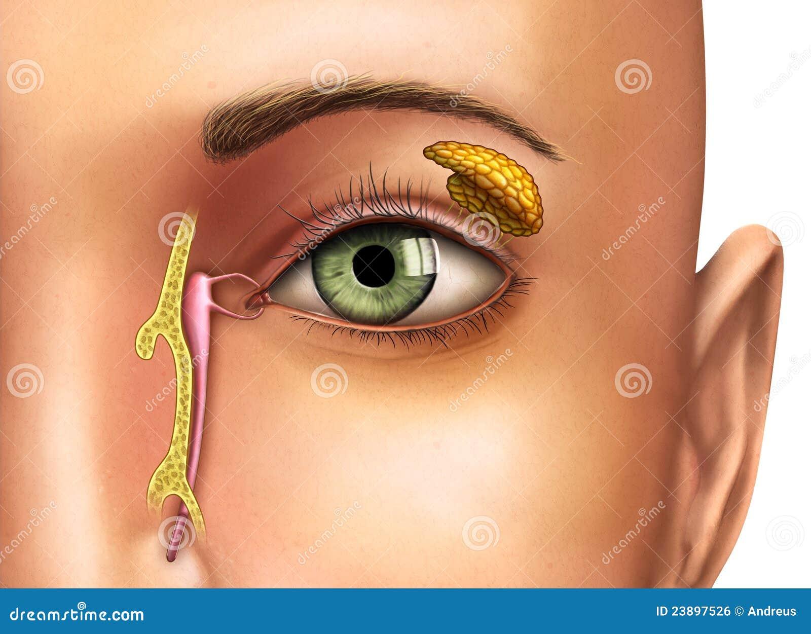 Как сделать слезящиеся глаза