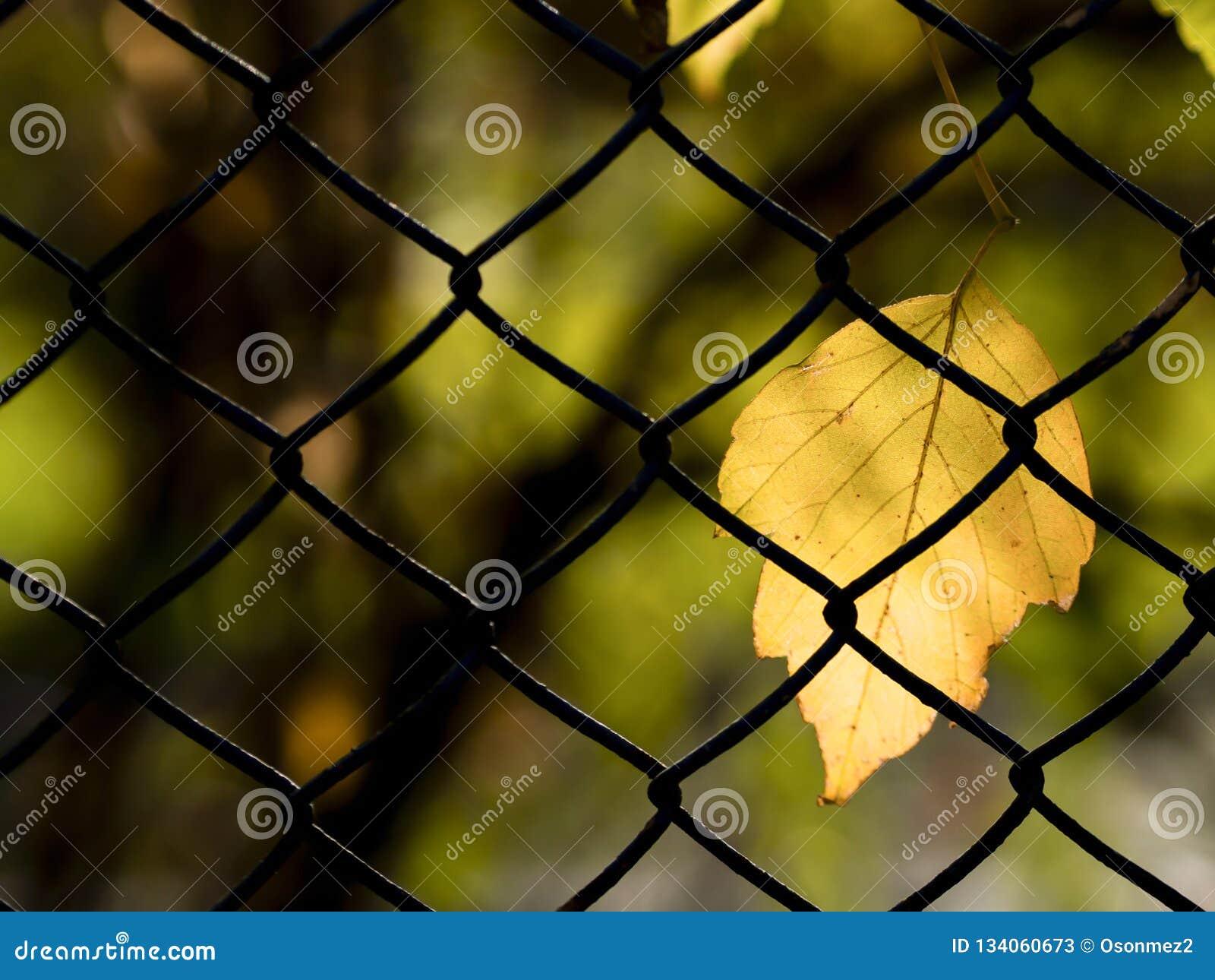 Желтое положение лист и предпосылки нерезкости на ячеистой сети в осени