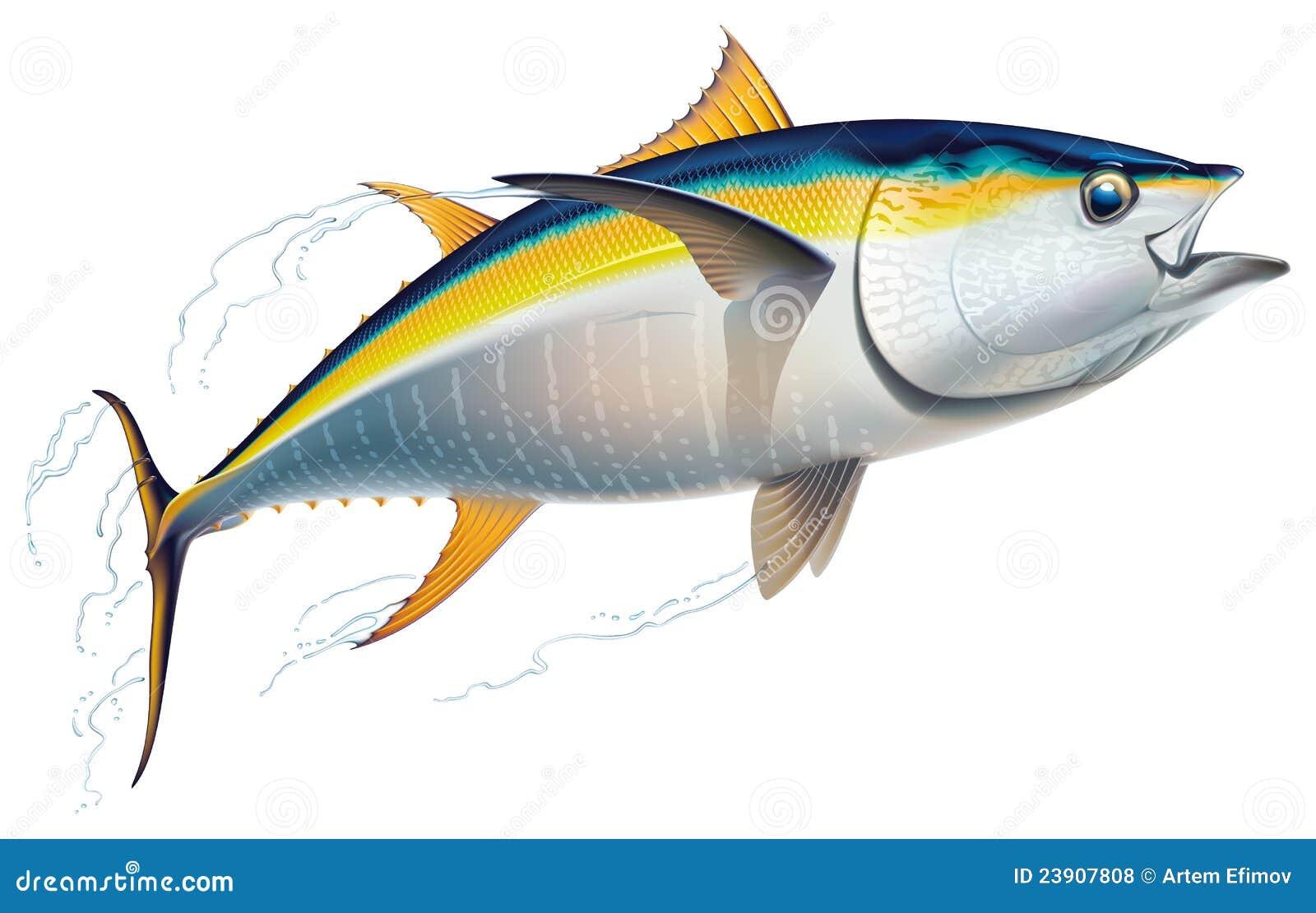 желтопёр туны