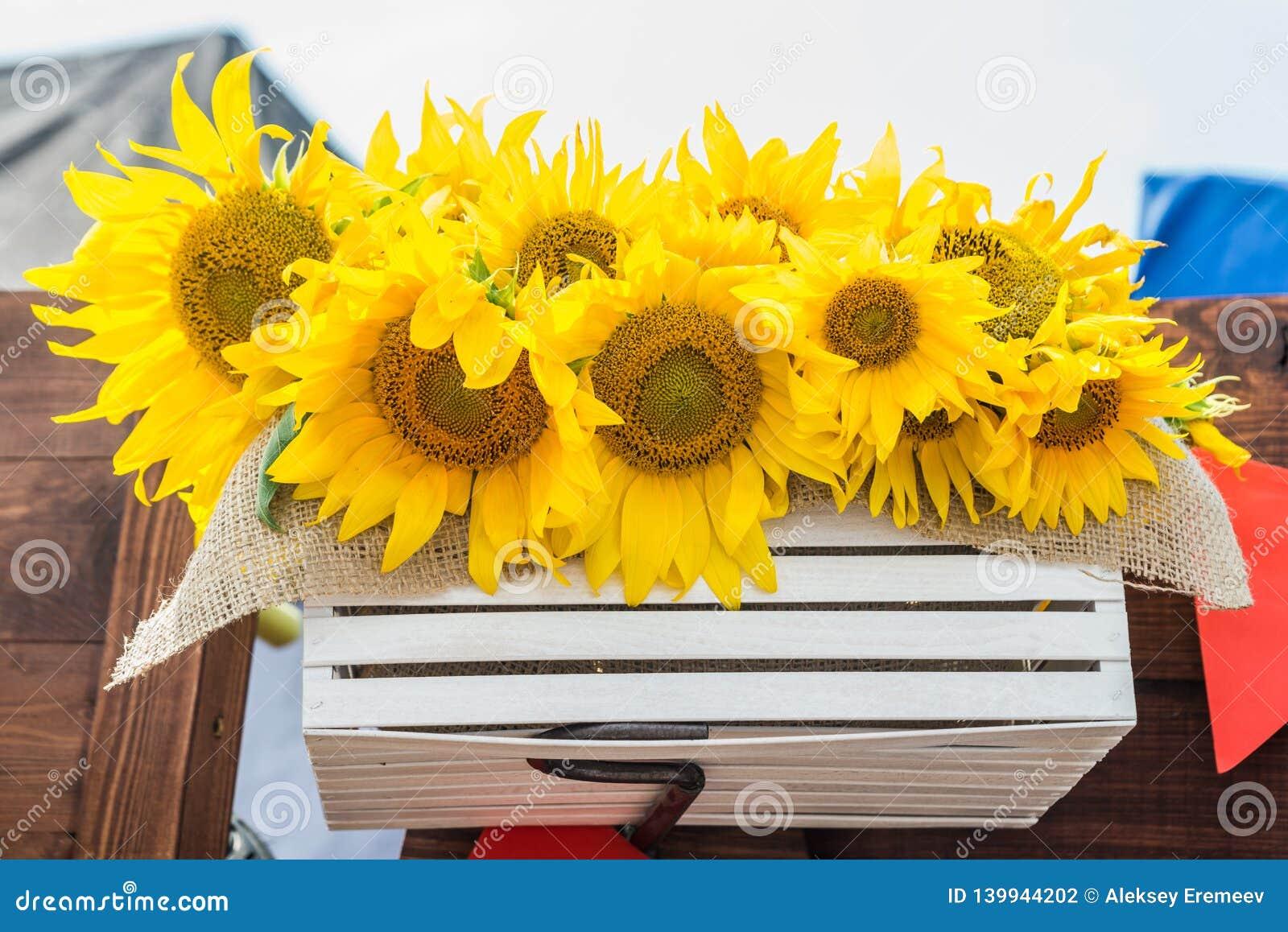 Желтые красивые солнцецветы в деревянной коробке