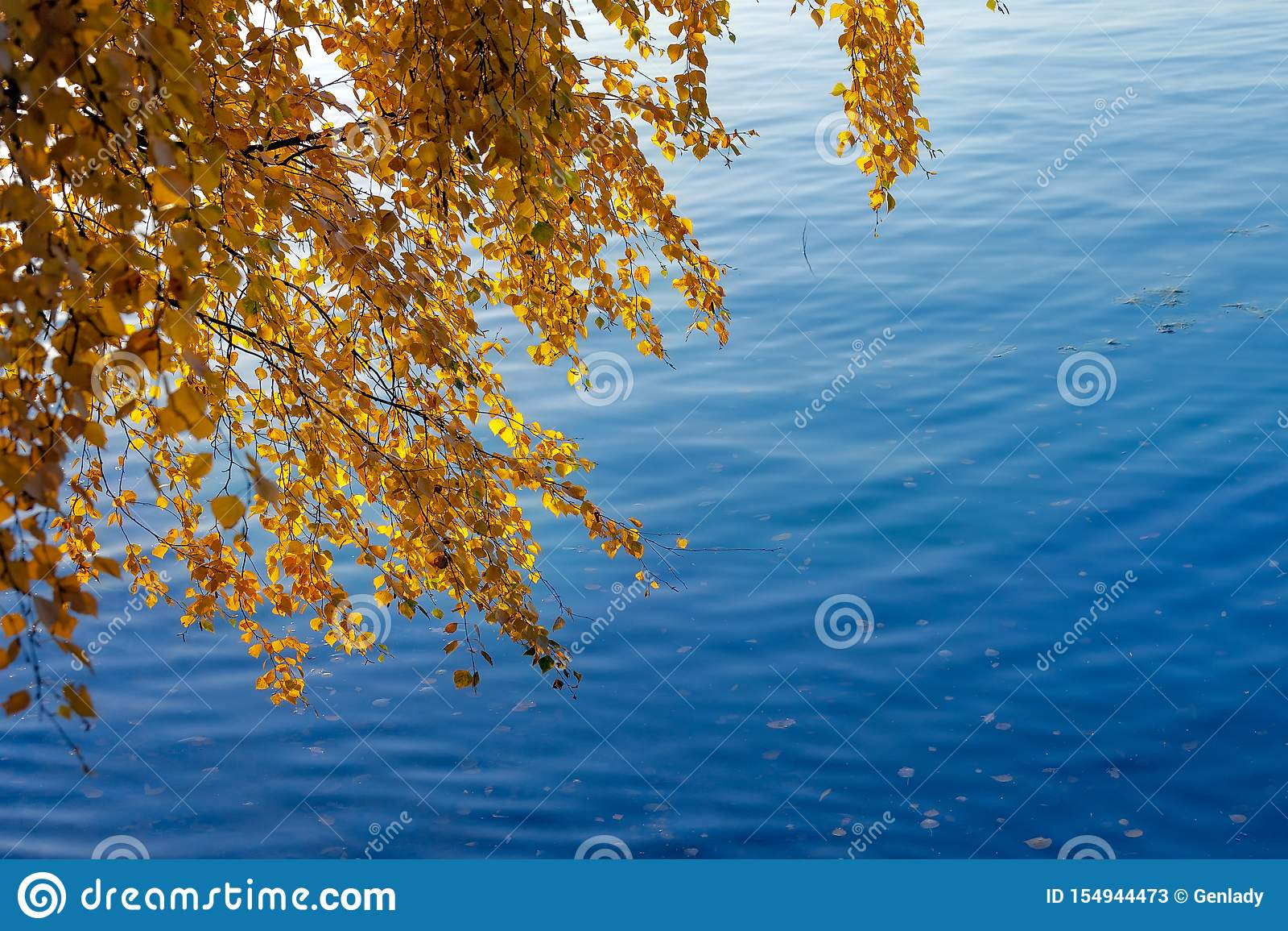 Желтые листья осени на ветвях березы над голубым рекой в падении
