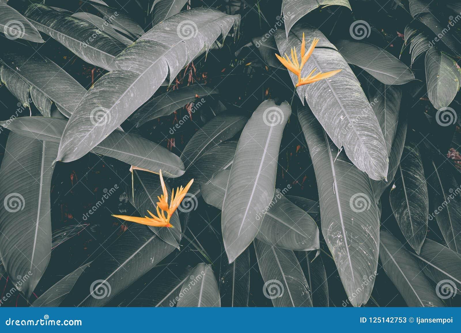Желтые цветки с штейновыми зелеными листьями