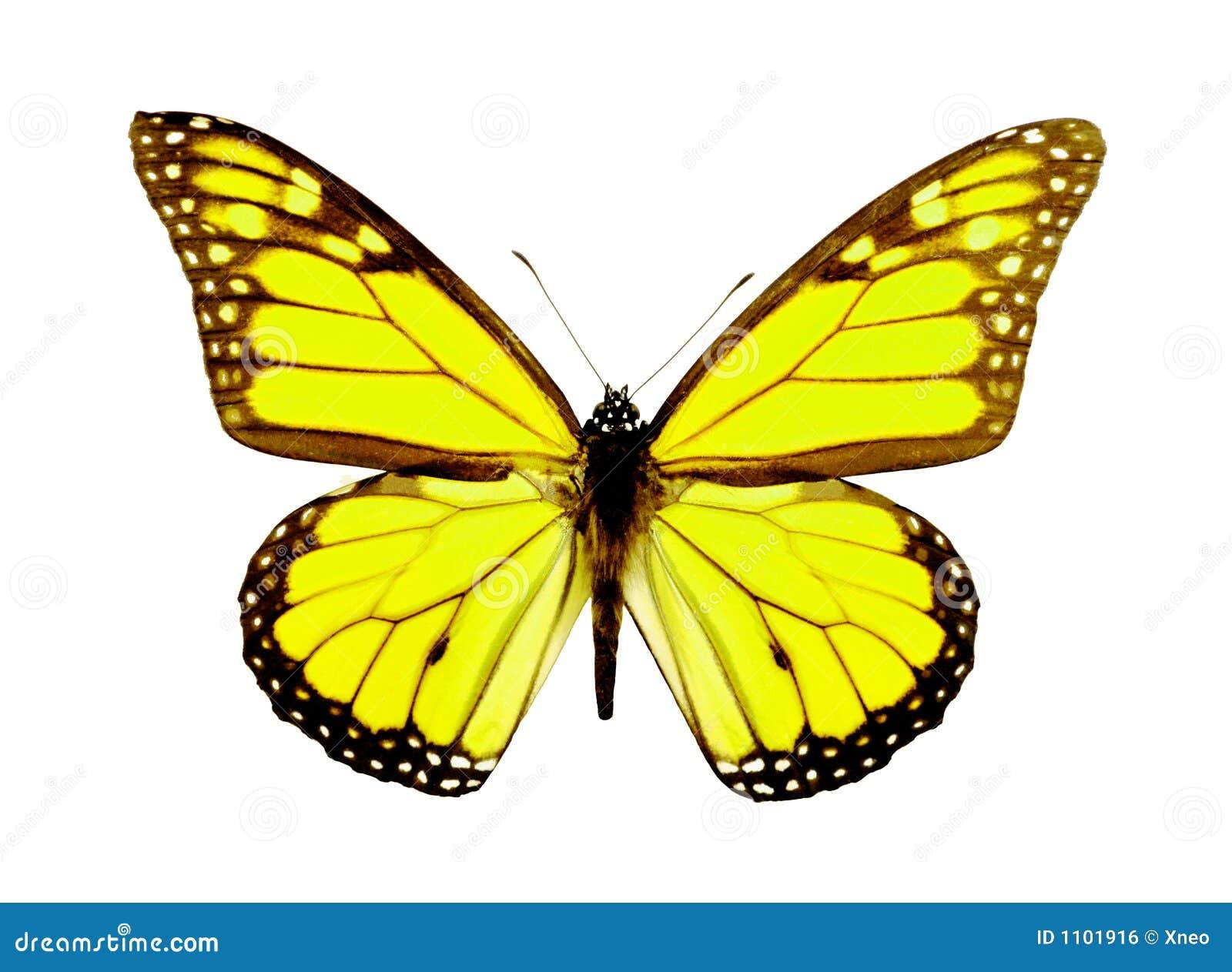 желтый цвет бабочки