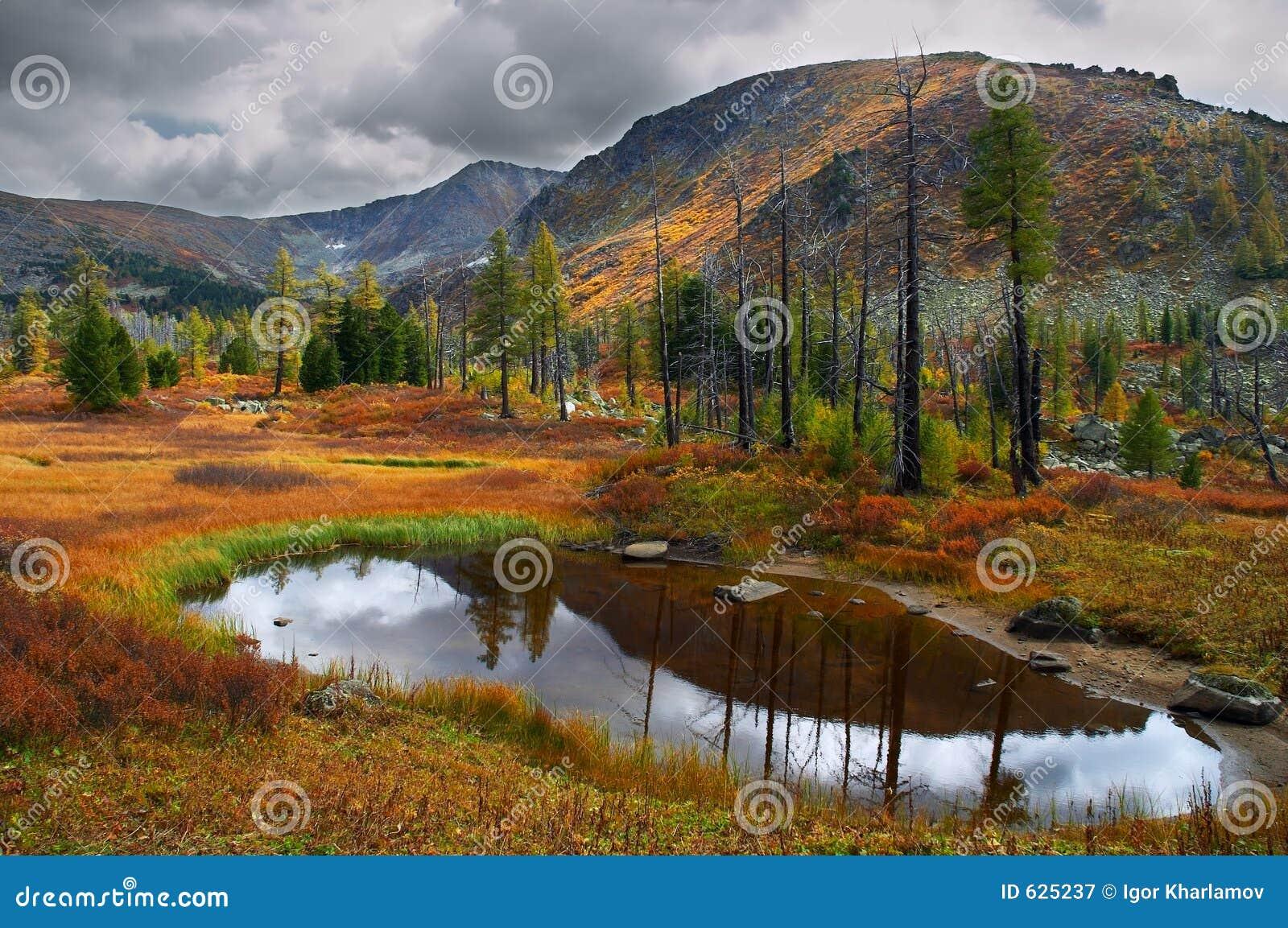 Download желтый цвет озера травы бесполезного Стоковое Изображение - изображение насчитывающей тускловато, также: 625237