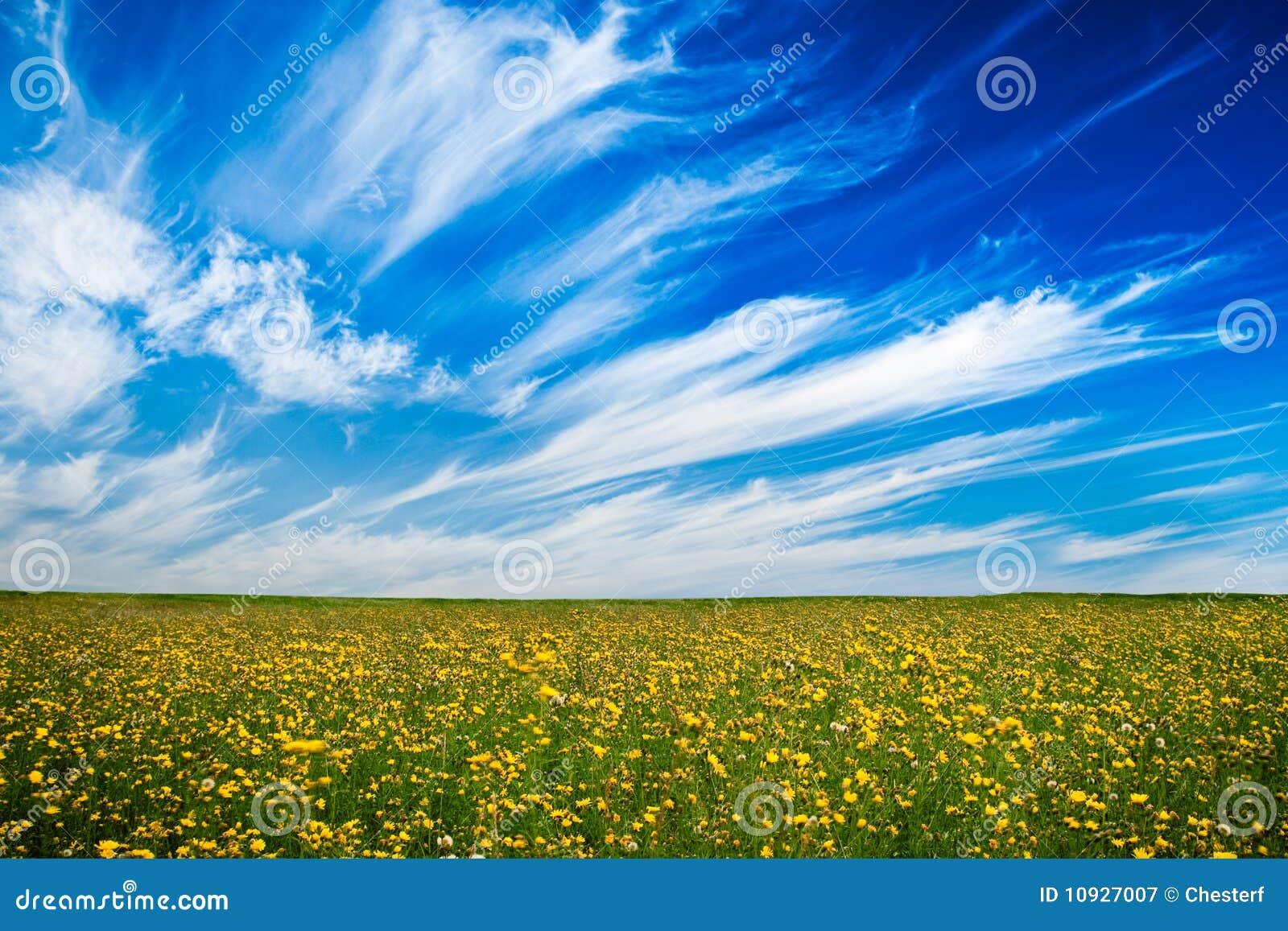 желтый цвет поля