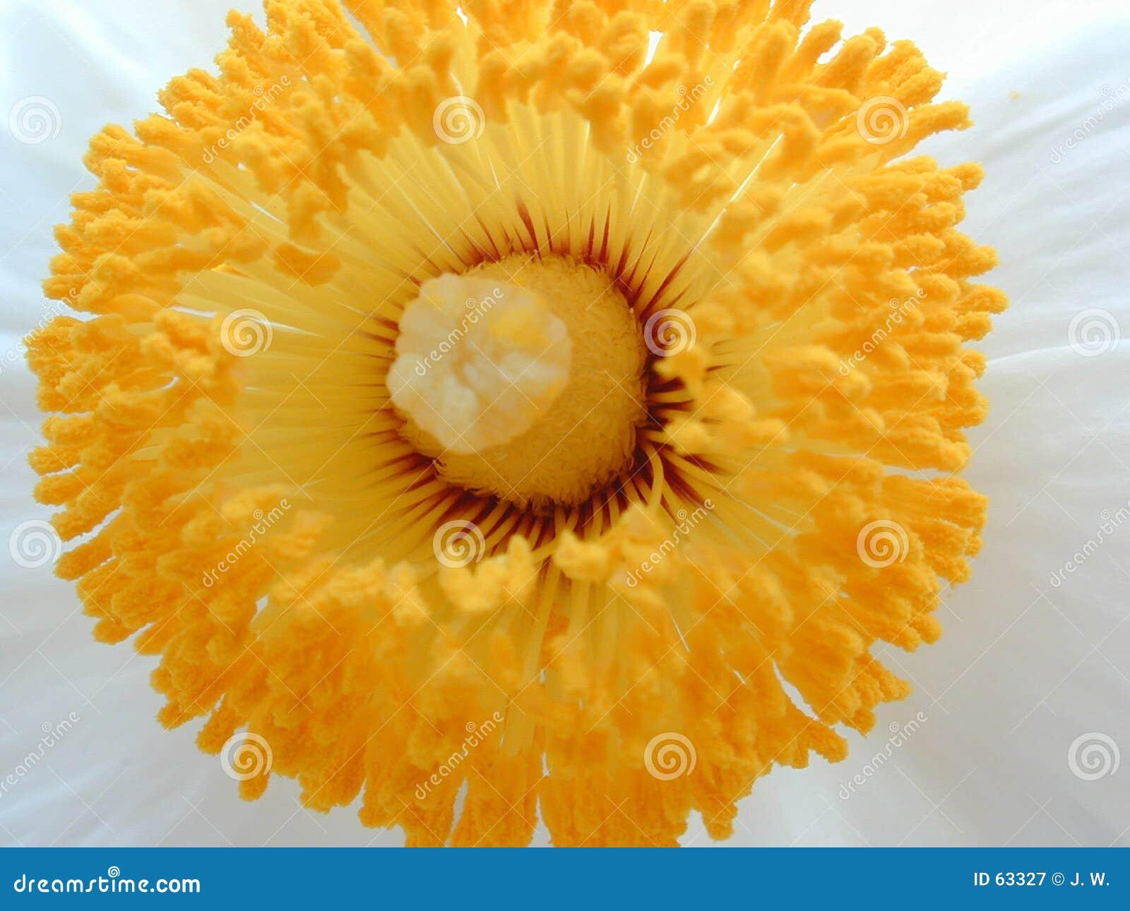 желтый цвет разбивочного цветка белый