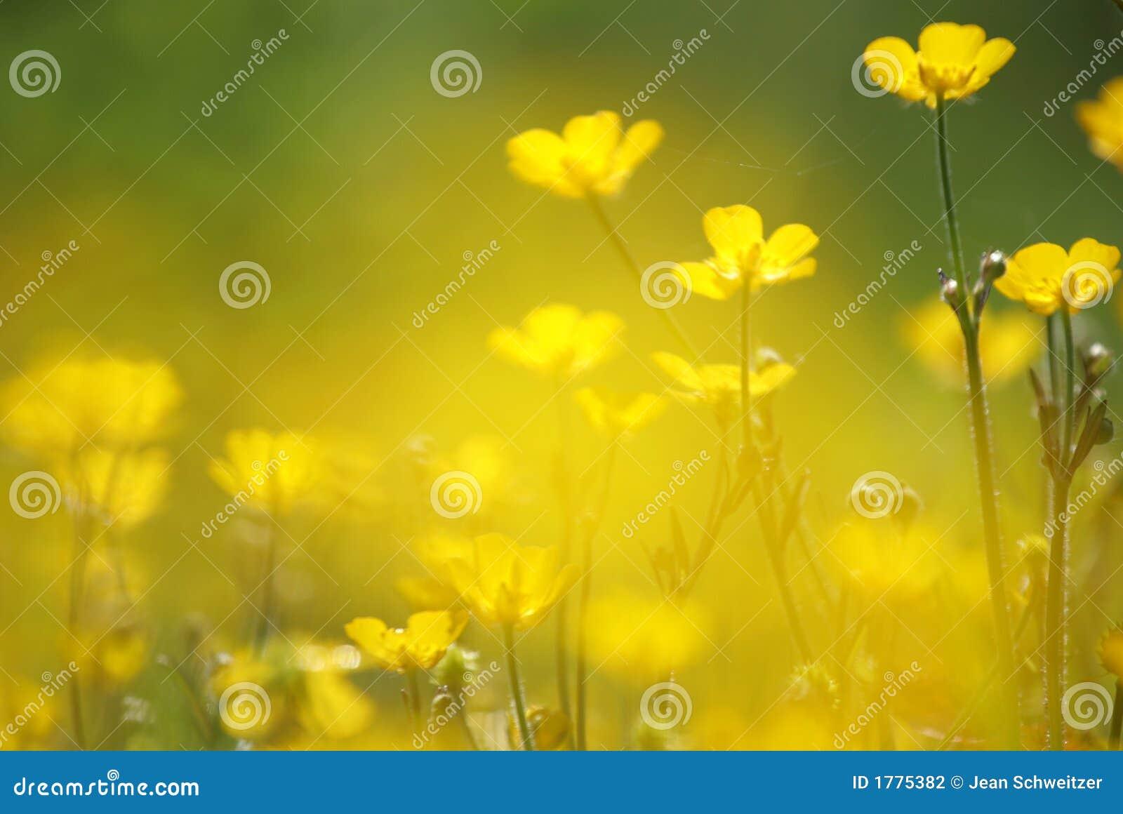 желтый цвет цветка крупного плана