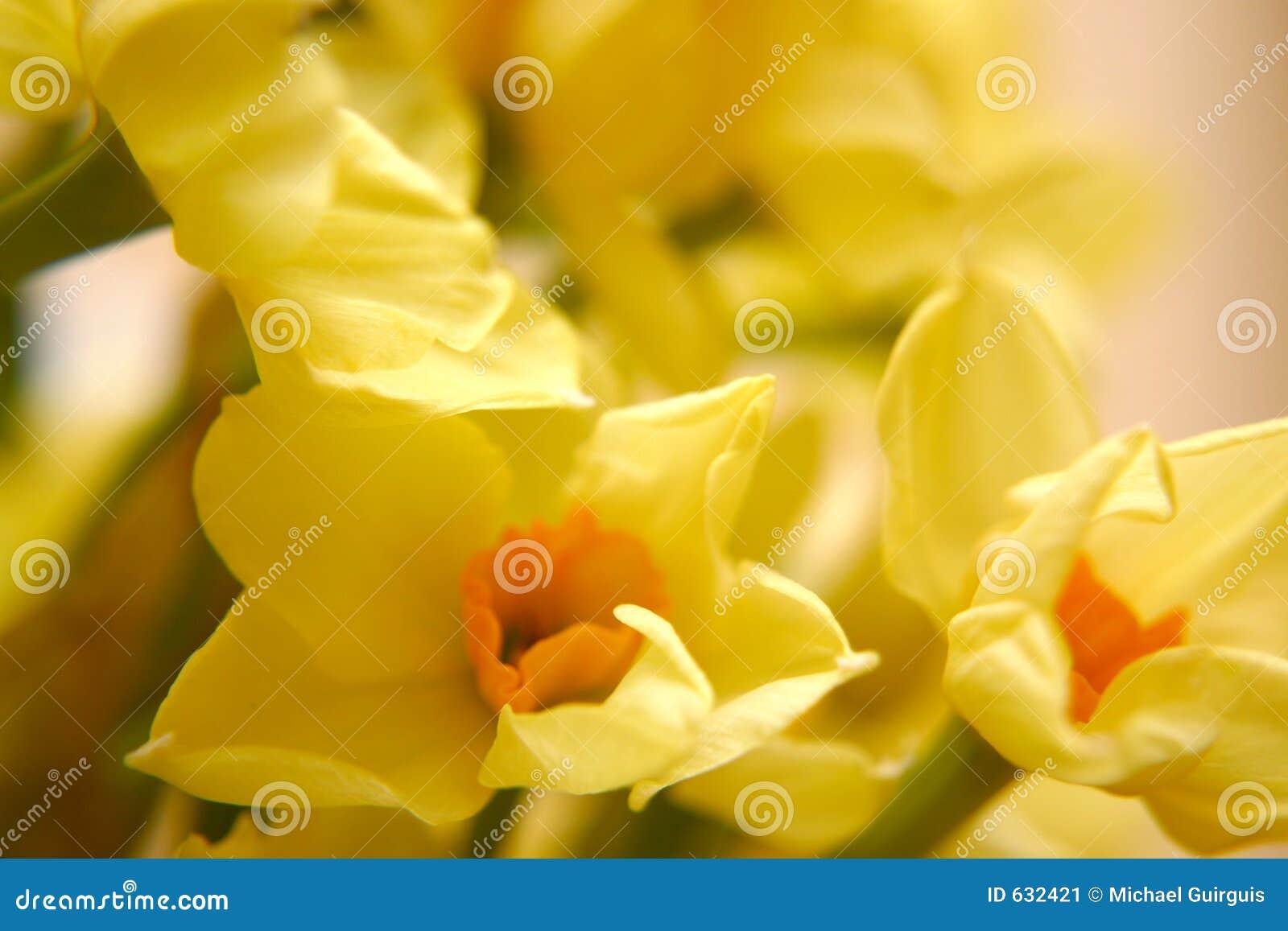 Download желтый цвет цветков стоковое изображение. изображение насчитывающей украшение - 632421