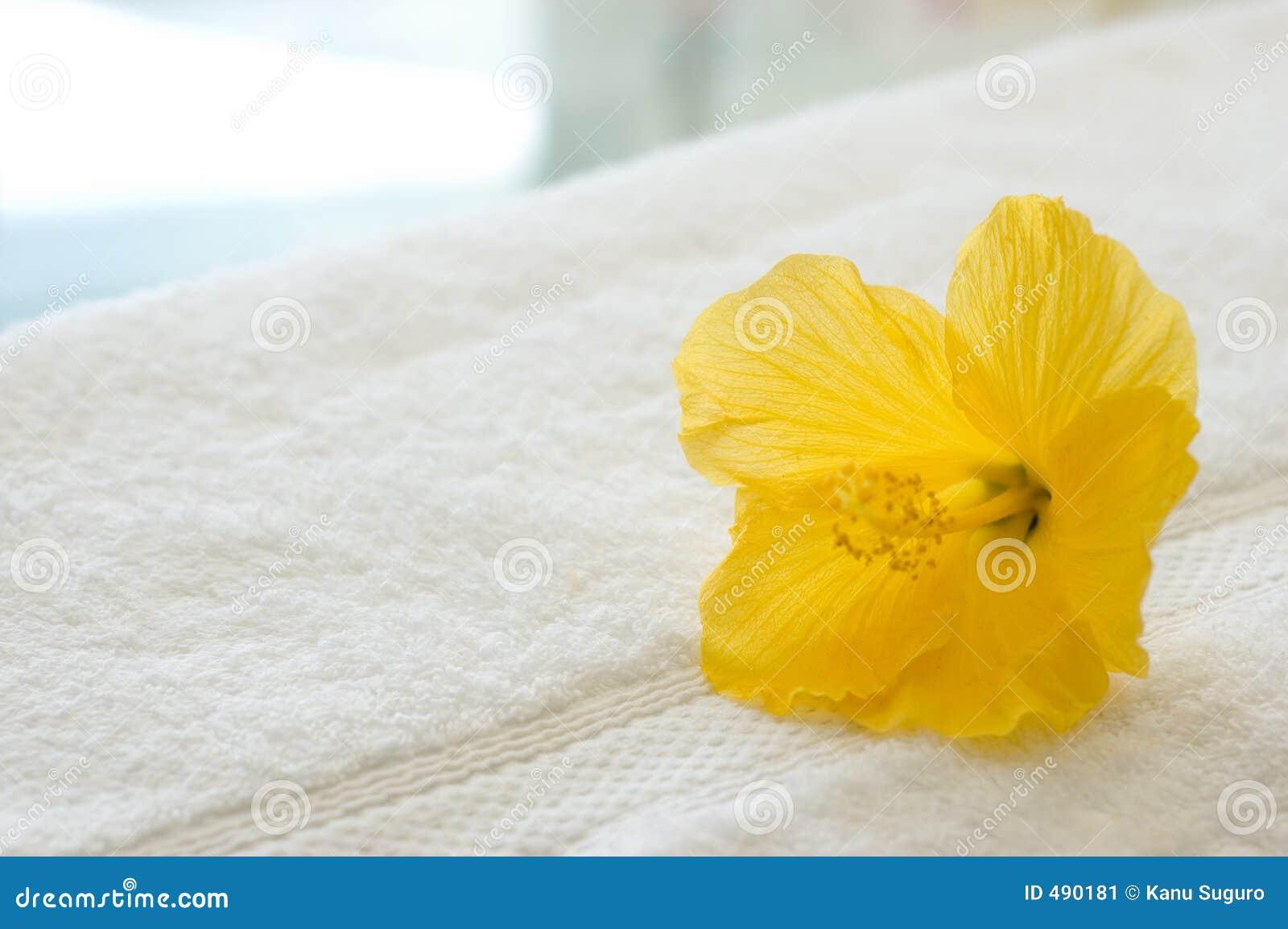 желтый цвет hibiscus