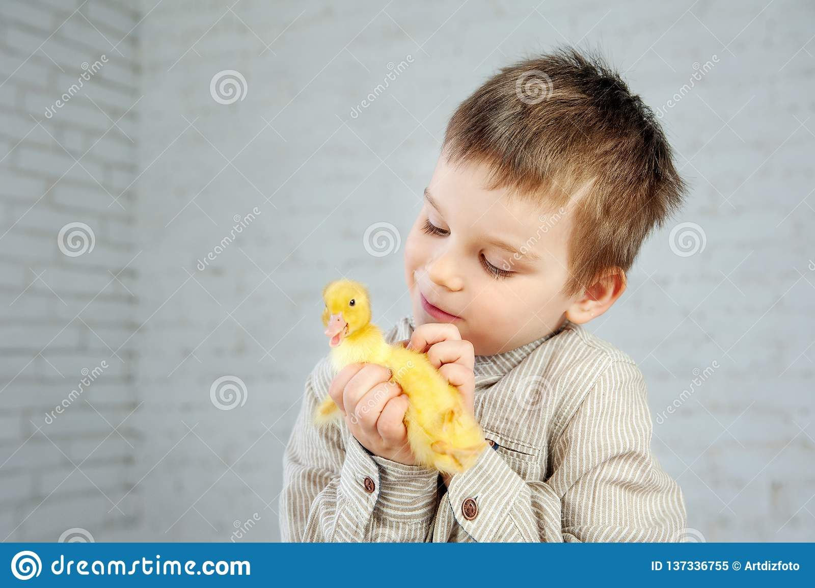 Желтый newborn утенок в руках мальчика на белой предпосылке