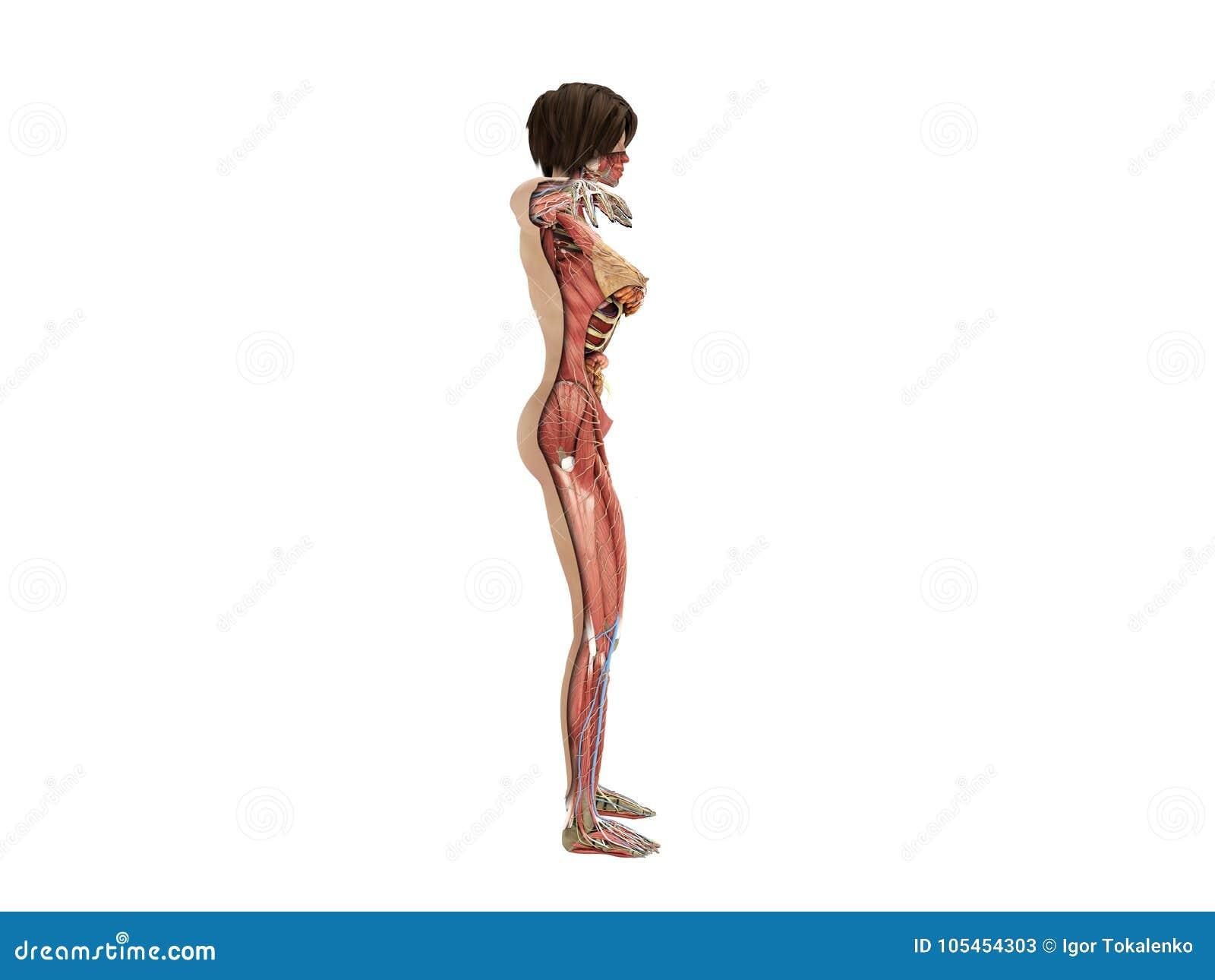 porno-video-anatomiya-zhenshini-saloy-obkonchennih-pisek-zhenshin