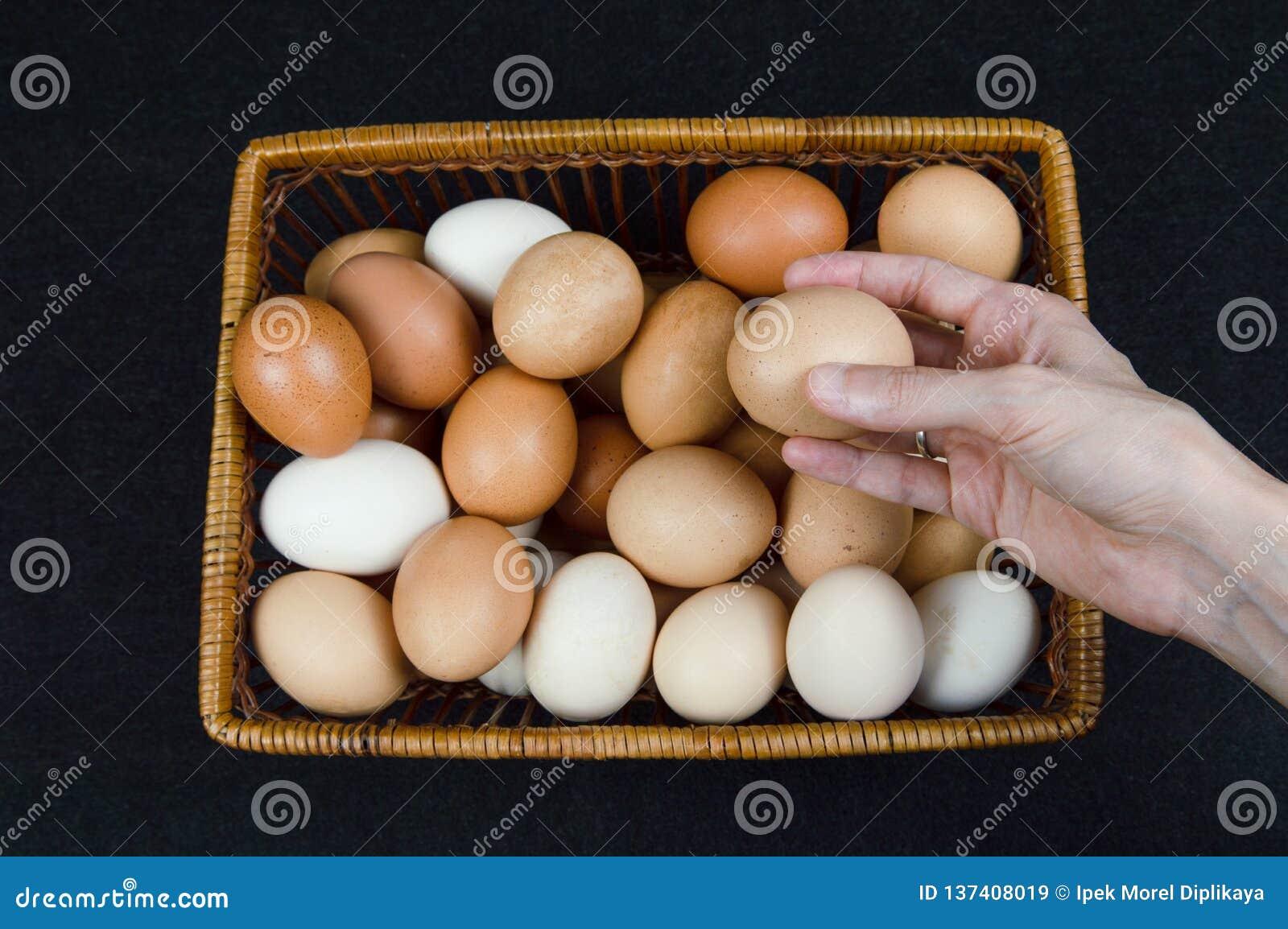Женская рука принимая яйцо цыпленка от корзины на черной предпосылке