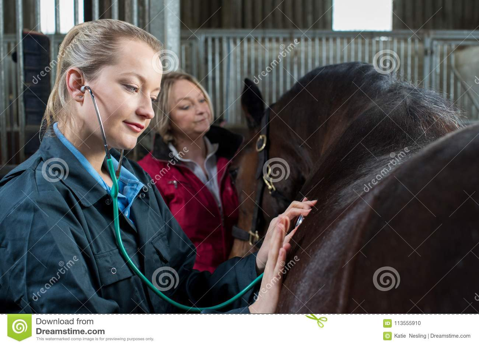 Женский ветеринар давая медицинское обследование к лошади в конюшне