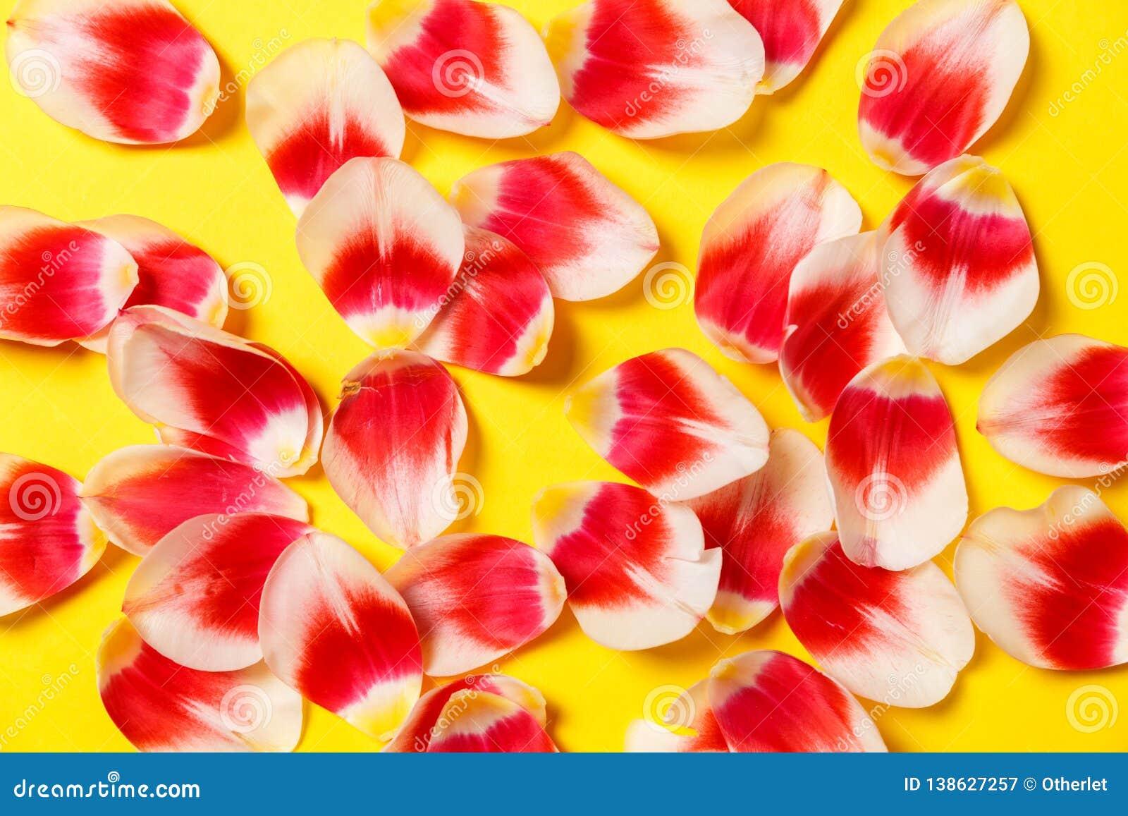 Женственная стильная насмешка вверх с цветком тюльпана, лепестками Космос для вашего дизайна, свадьбы экземпляра, приглашения, бл