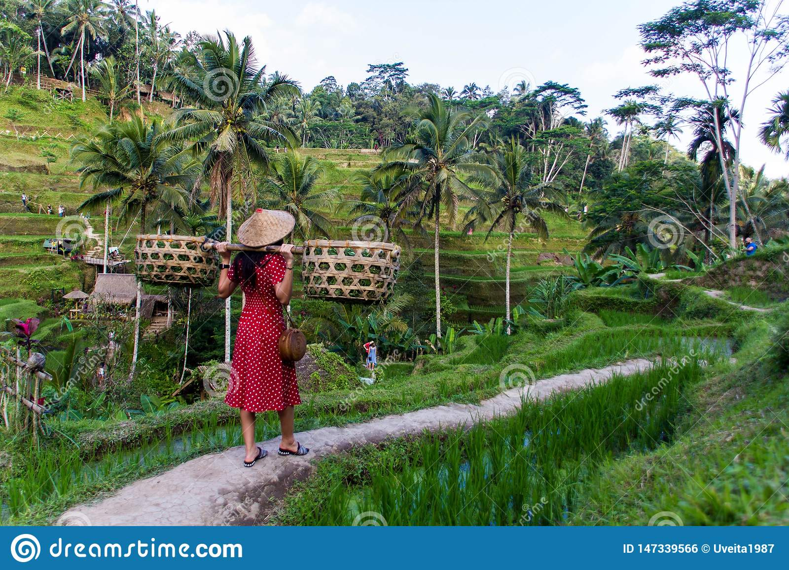 Женщина в красном цвете с корзинами в полях риса