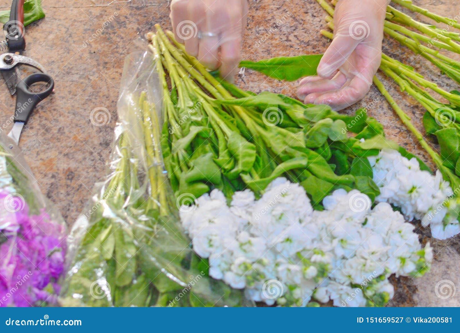 Женщина делая букет из цветков mattiola весны