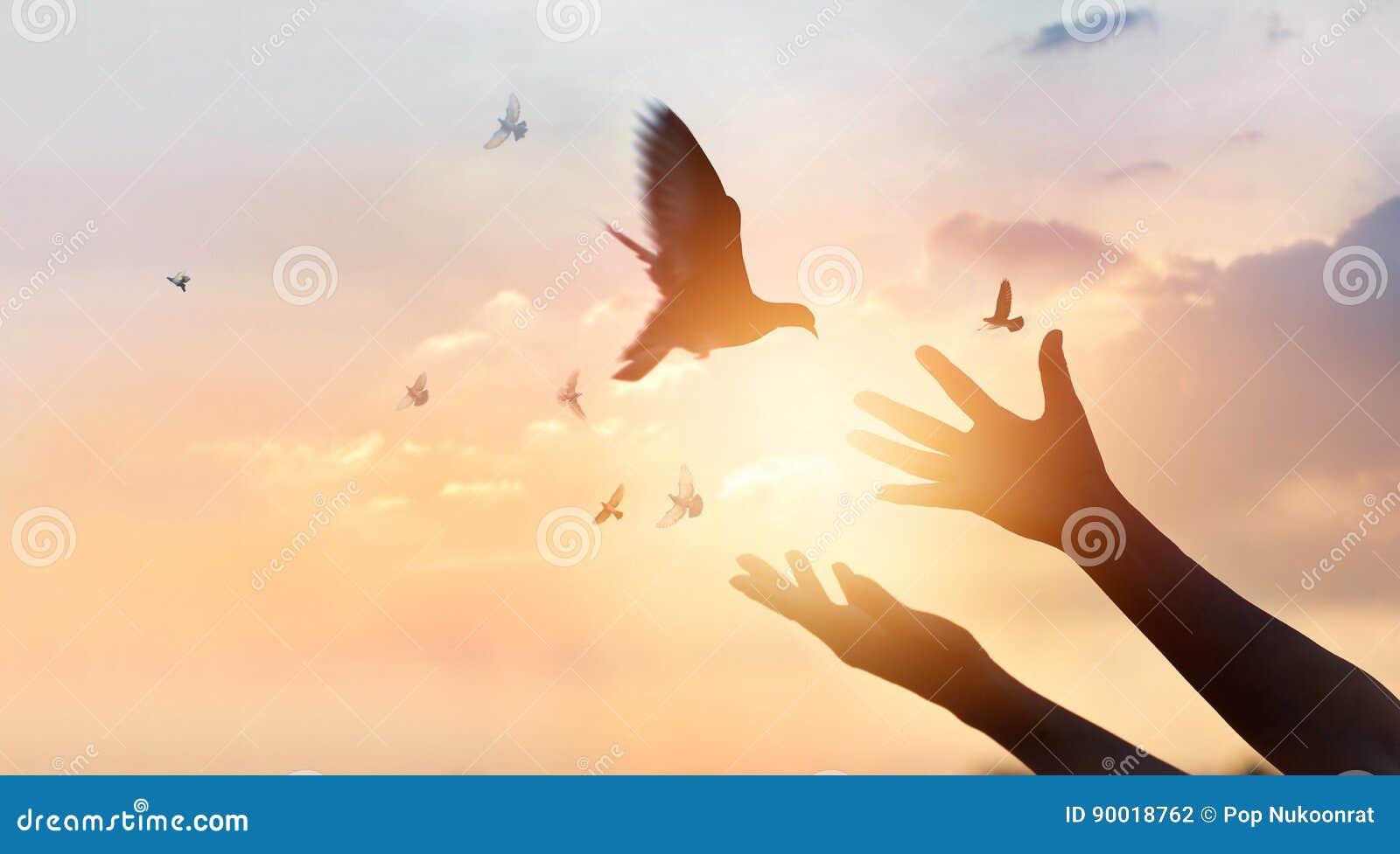 Женщина моля и освобождает птиц летая на предпосылку захода солнца