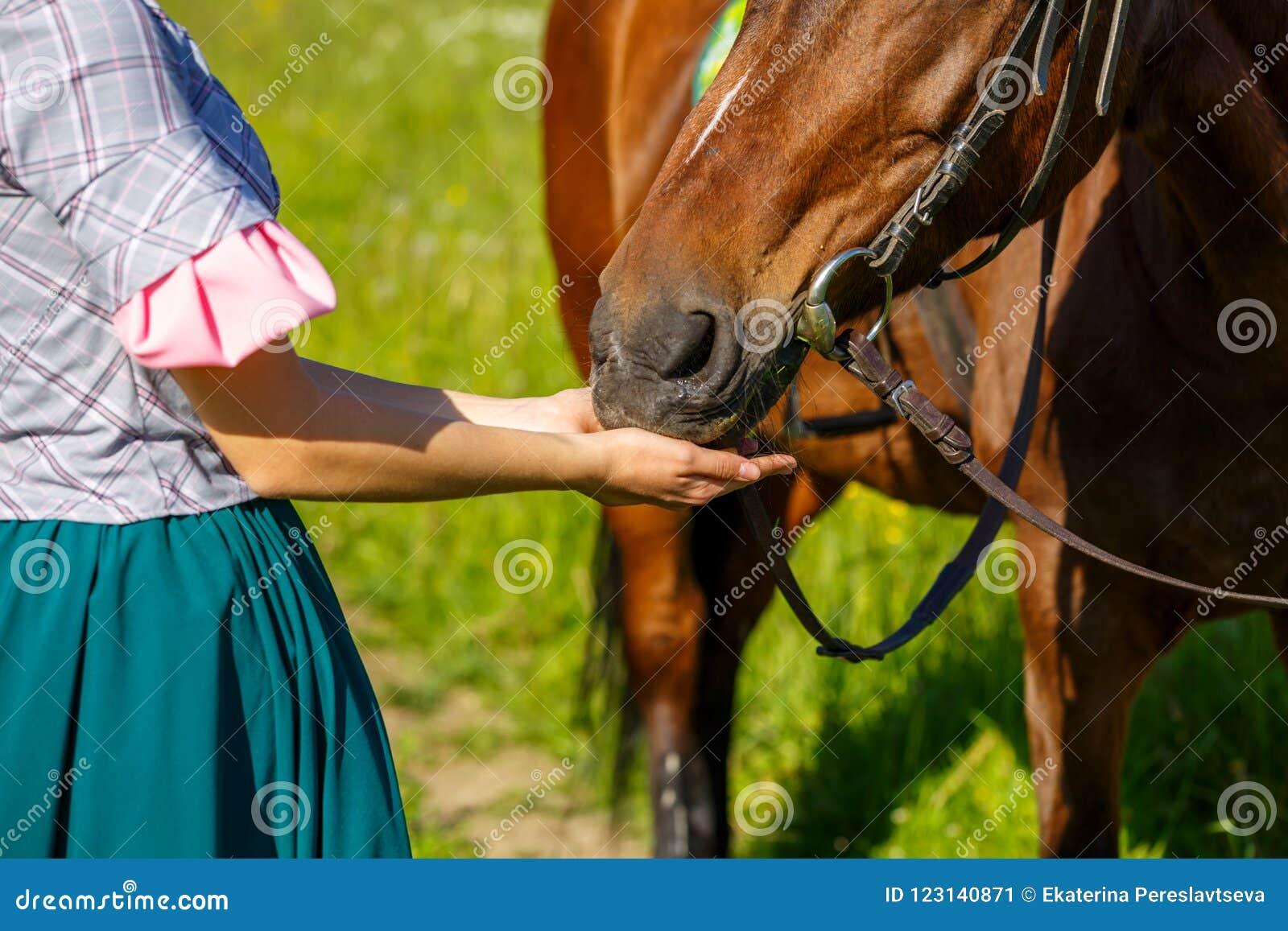 Женщина подает лошадь с животным фаворита рук