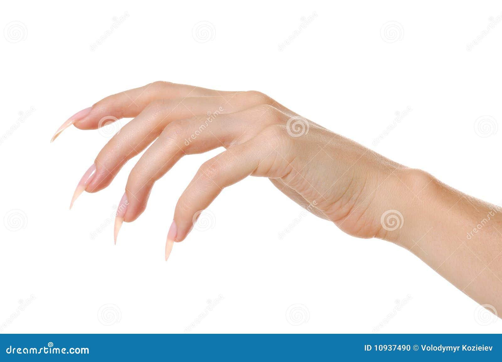 женщина руки