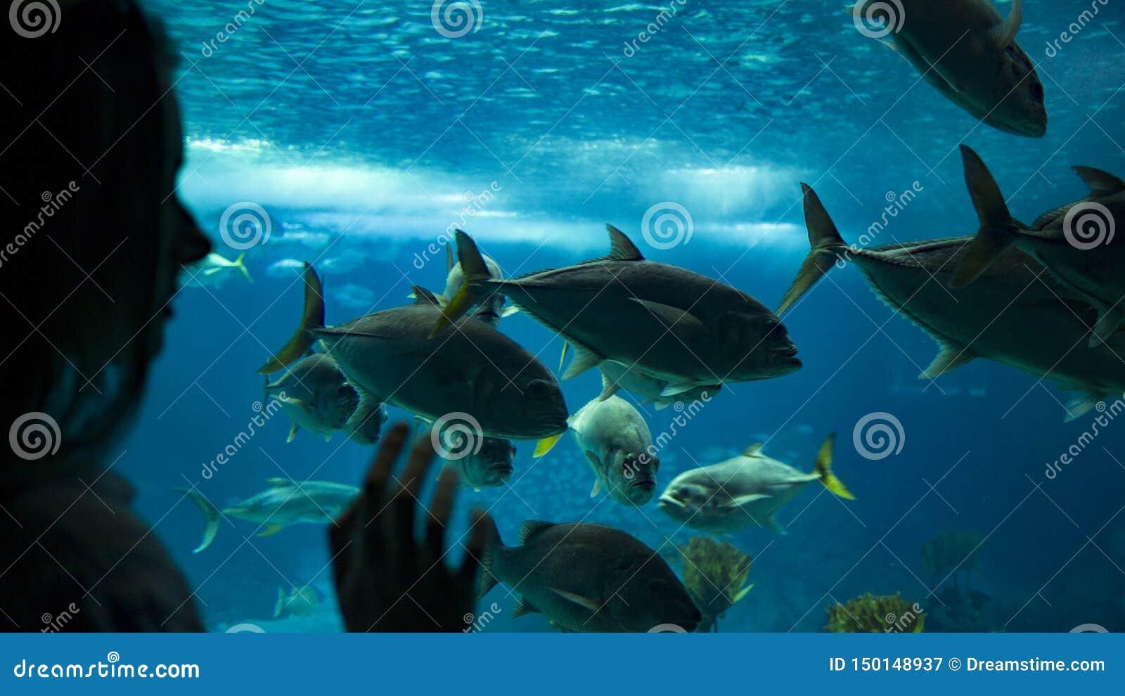 Женщина смотря рыб под водой через стекло