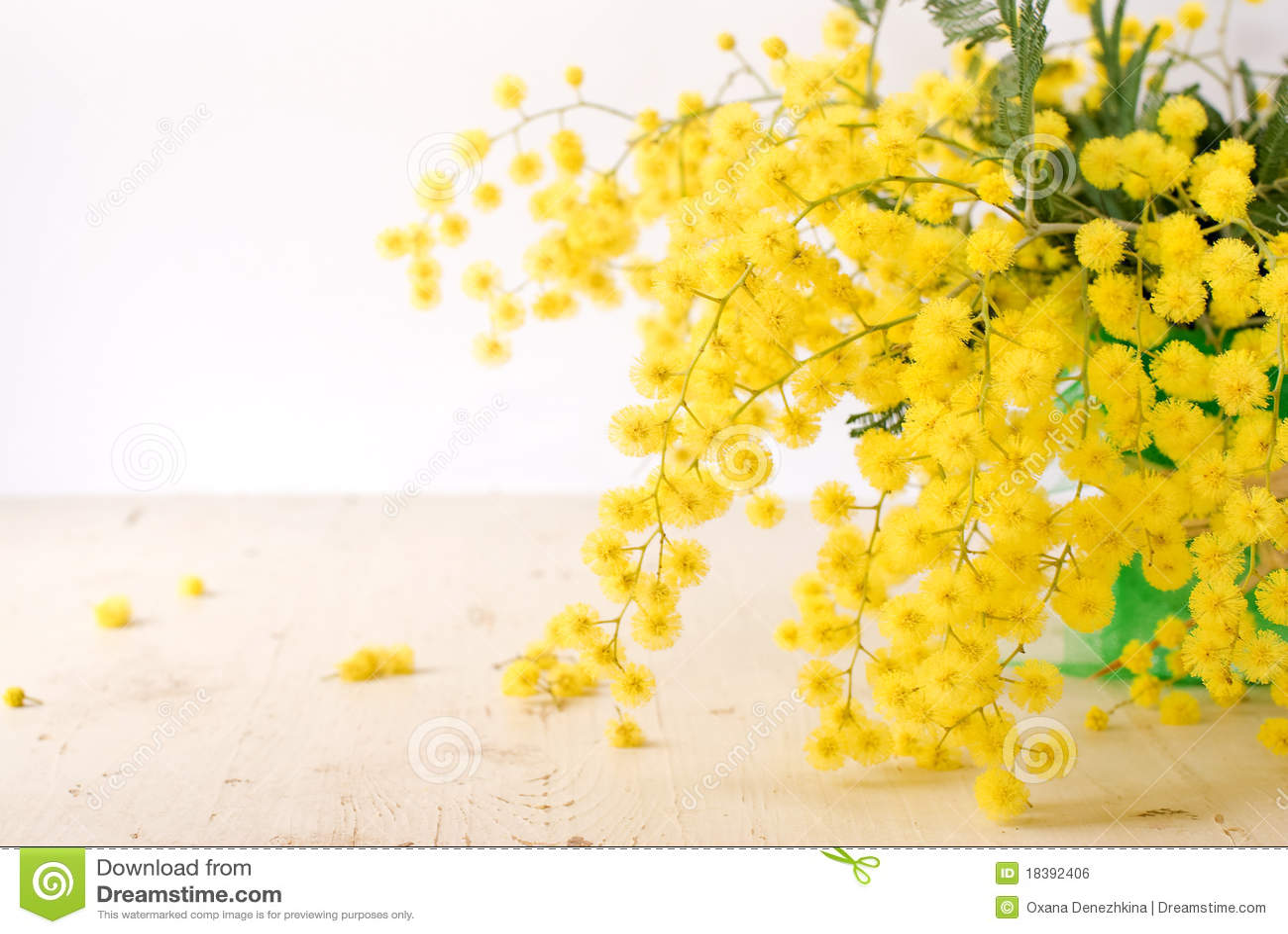 женщины mimosa s дня международные