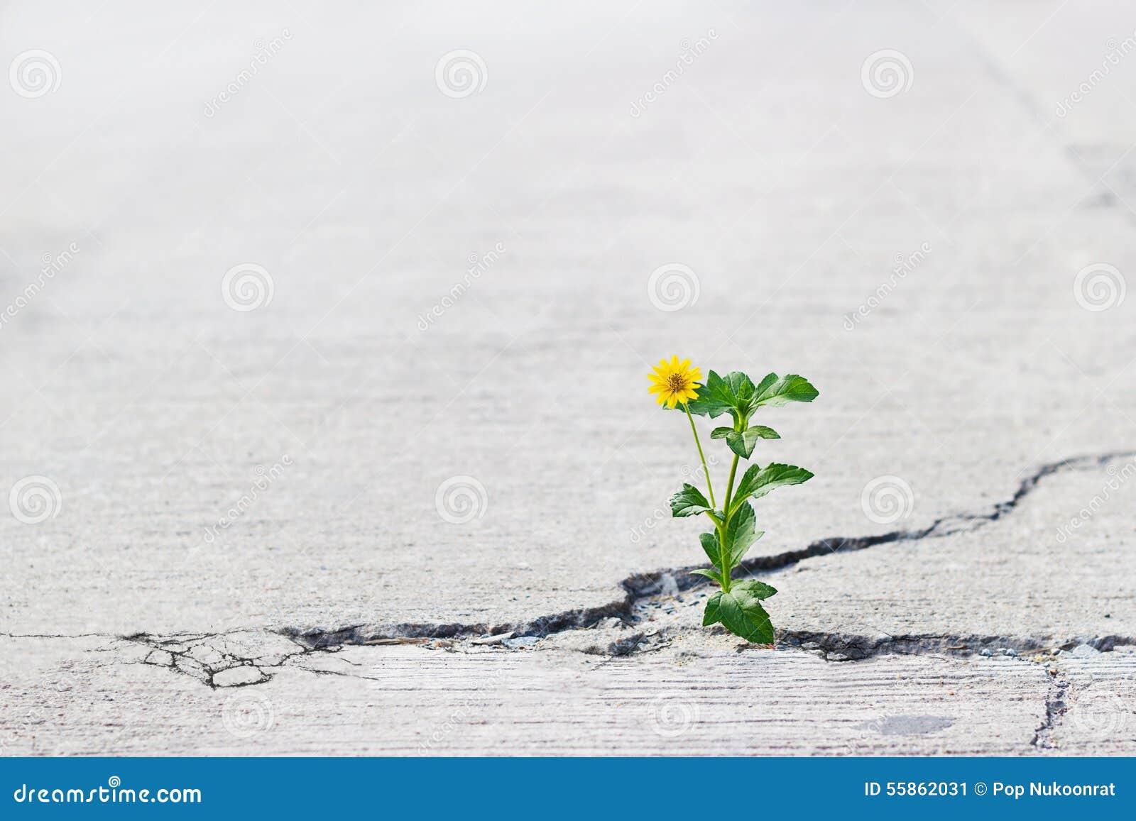 Желтое растущее цветка на великолепной улице, мягком фокусе