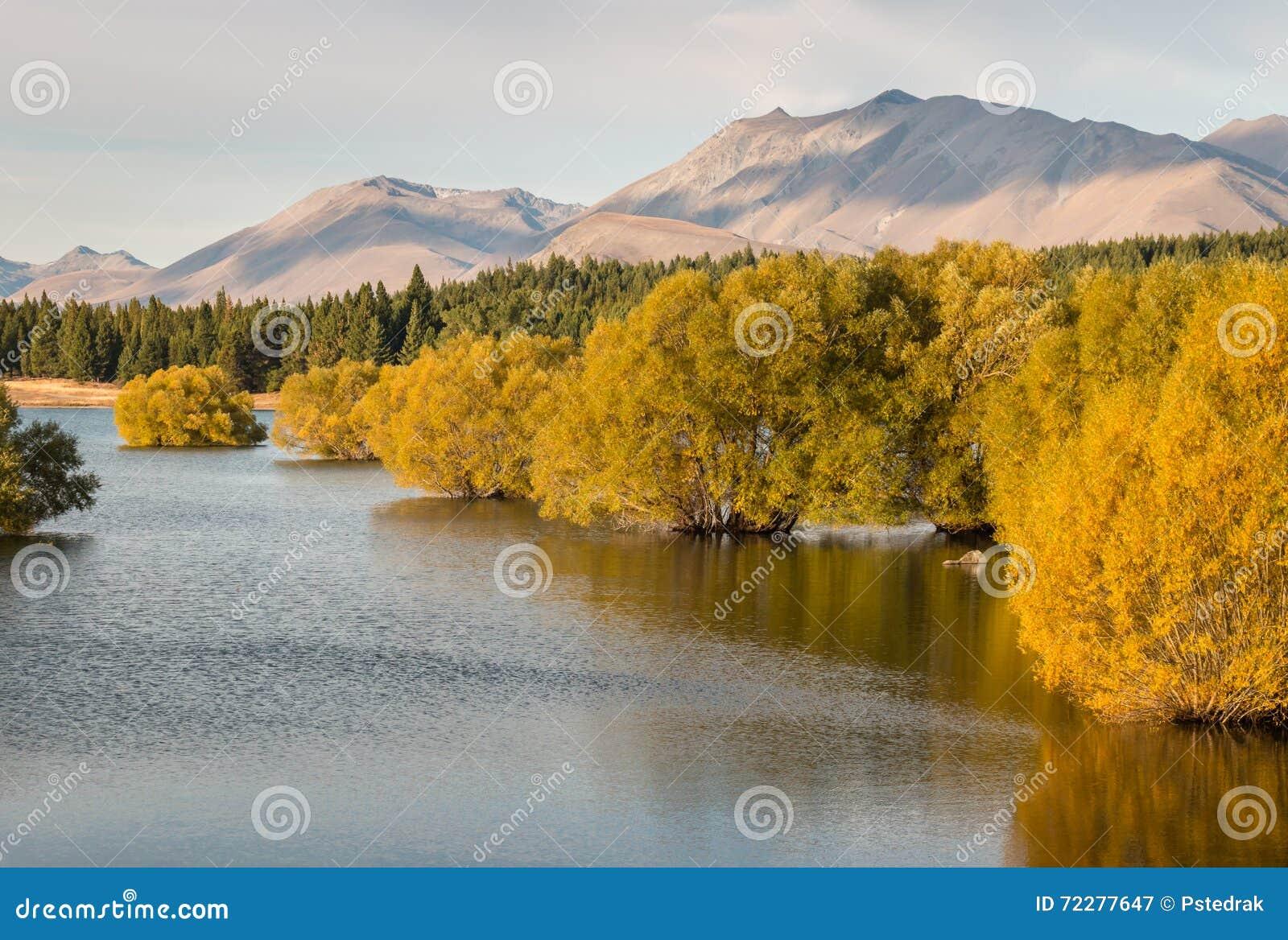 Download Желтые деревья вербы в озере Tekapo в Новой Зеландии Стоковое Изображение - изображение насчитывающей озеро, цветасто: 72277647