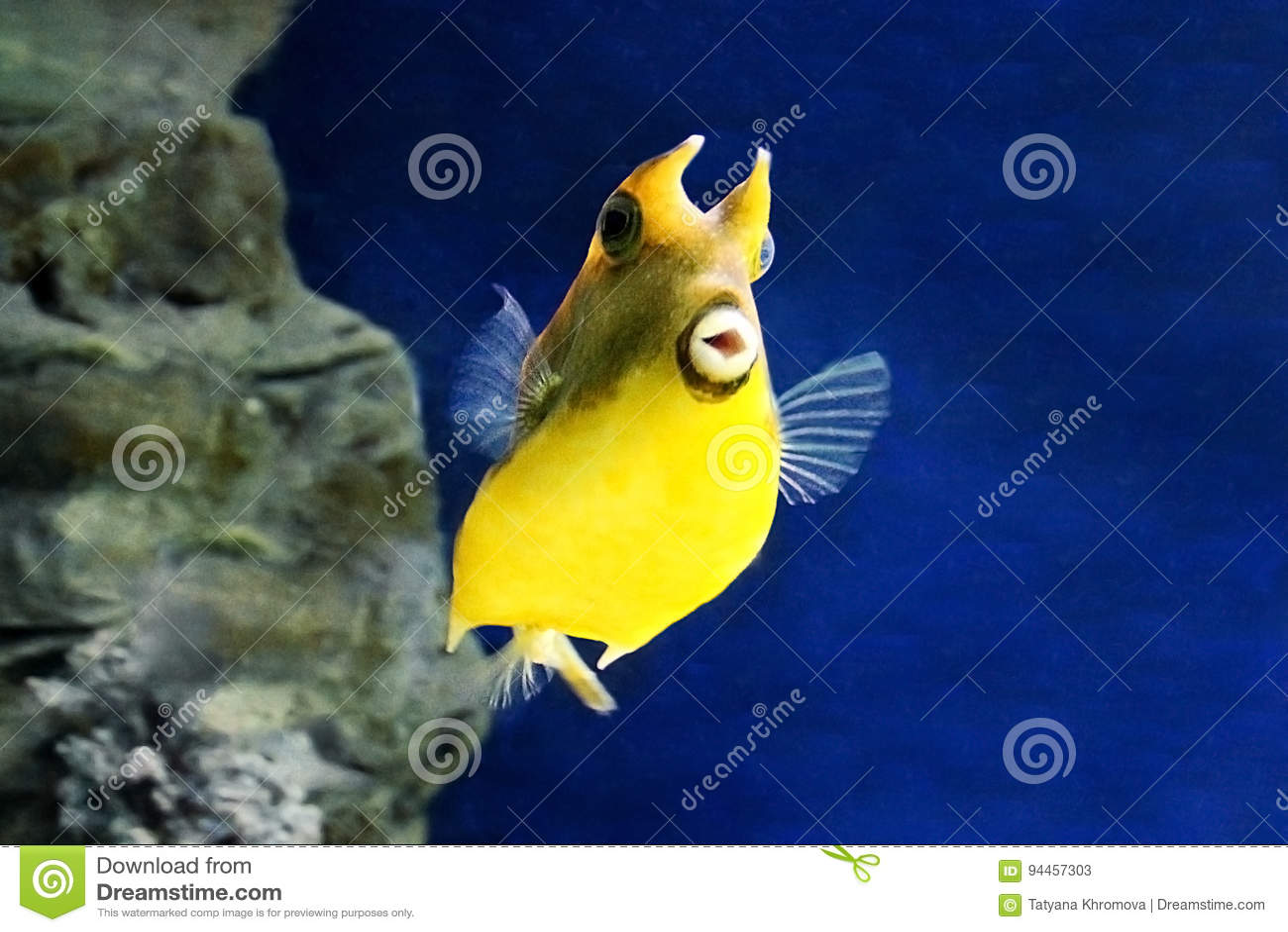 Желтые рыбы в океане