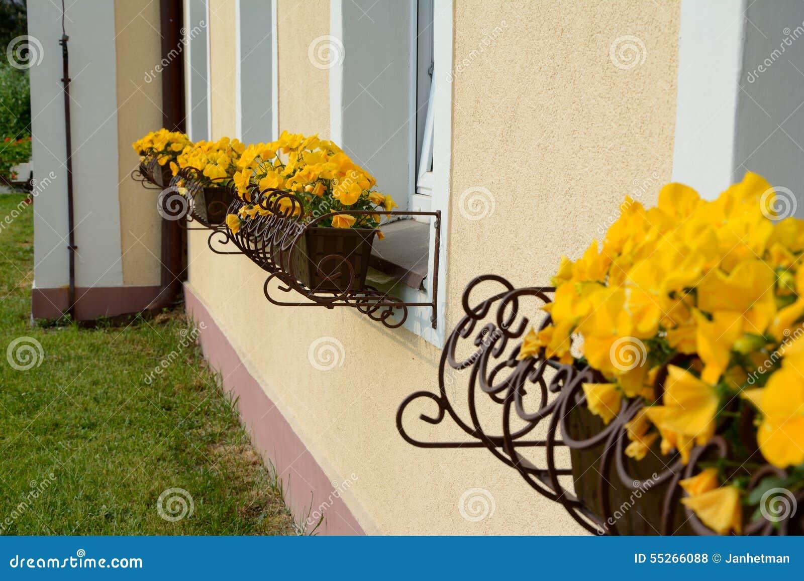 Желтые цветки в баках завода на окнах
