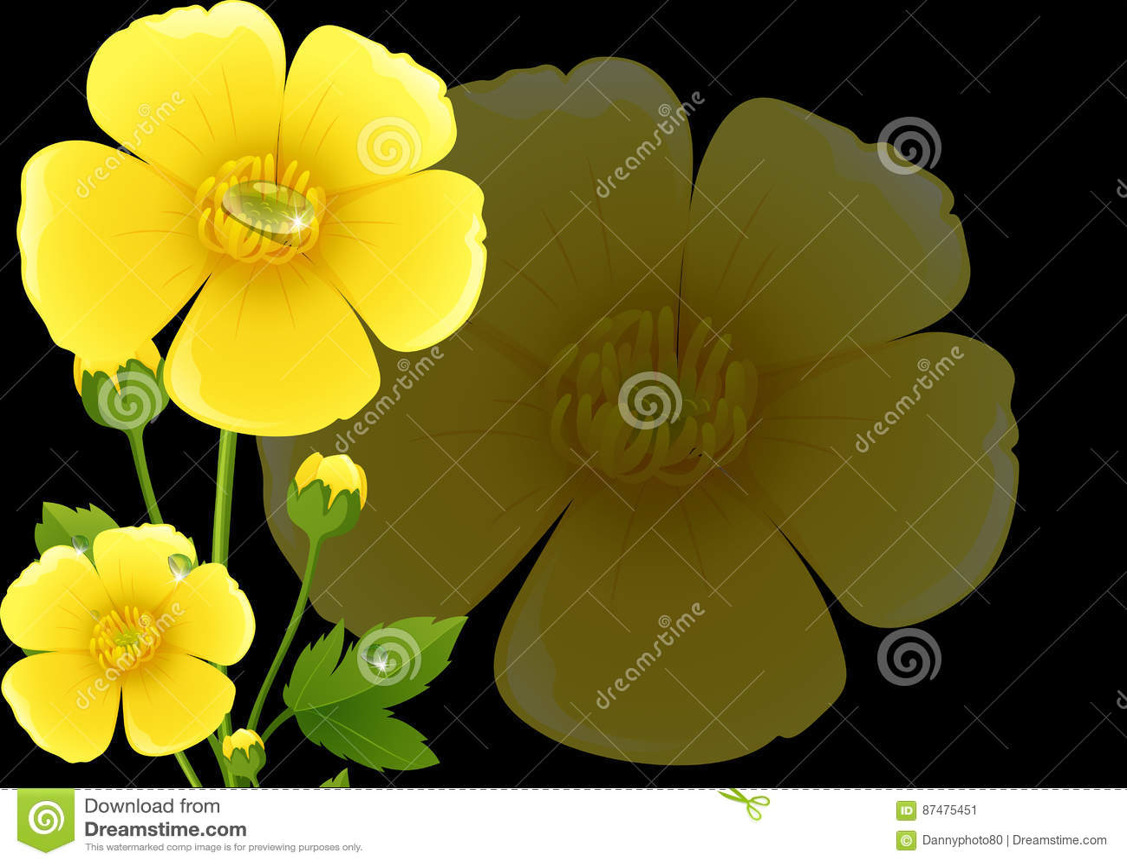 Желтые цветки лютика с черной предпосылкой
